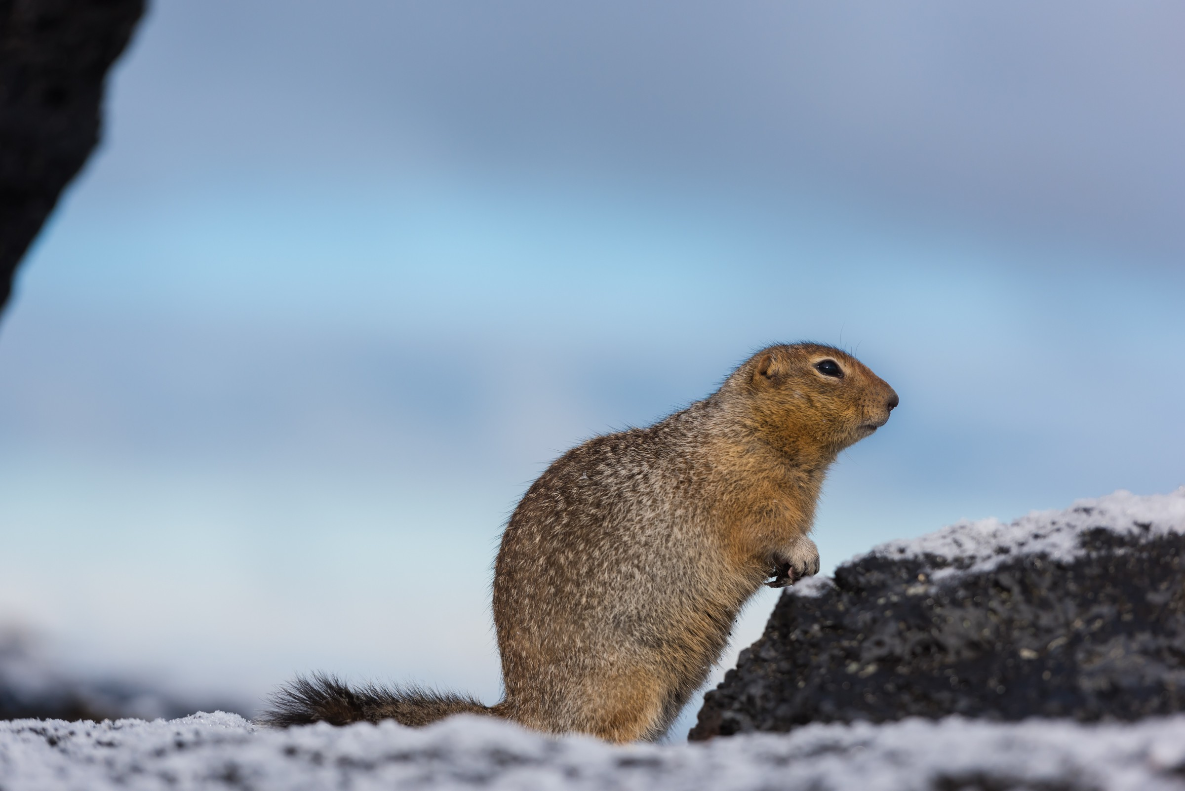 wildlife kamchatka 4785