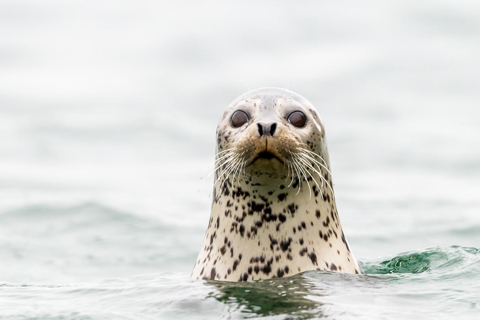 1809Kamchatka-wildlife-1.jpg