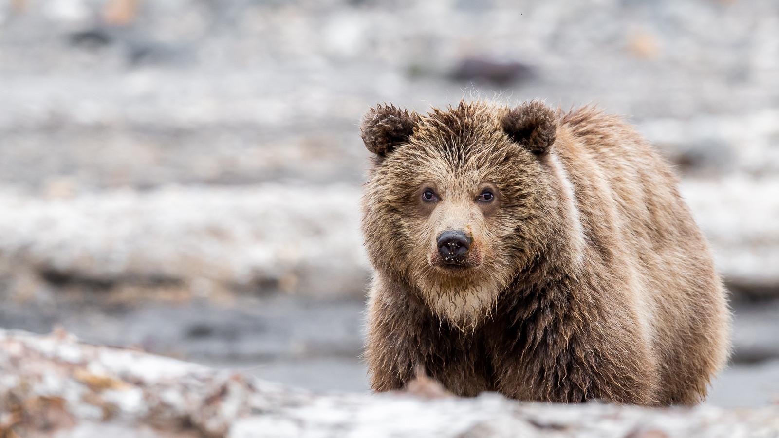 1809Kamchatka-wildlife-4.jpg