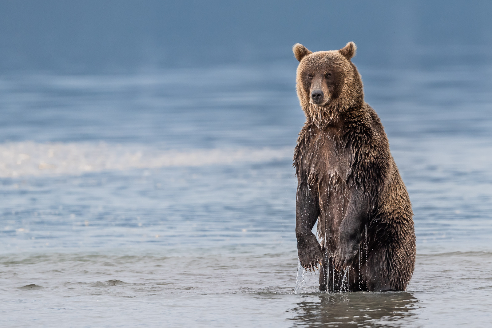 1809Kamchatka-wildlife-5.jpg