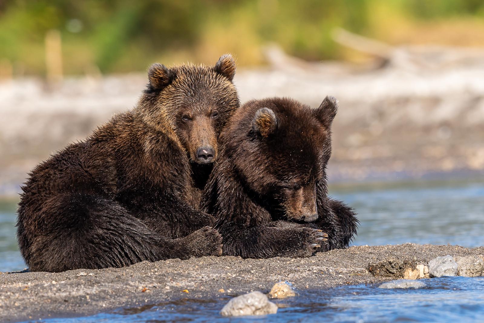 1809Kamchatka-wildlife-6.jpg
