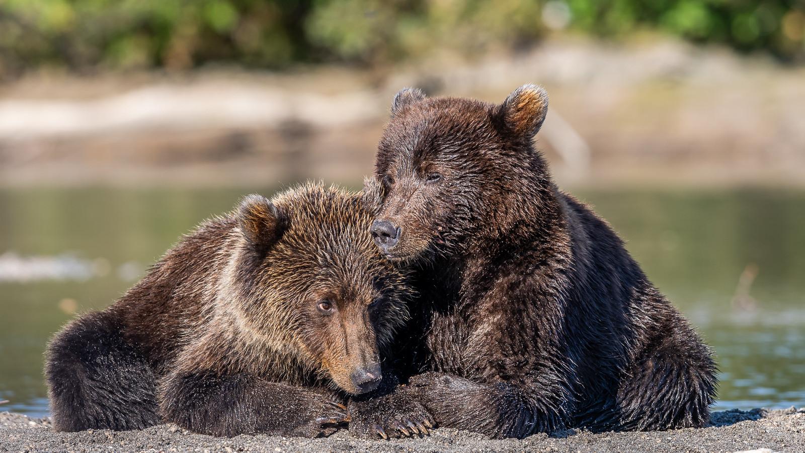 1809Kamchatka-wildlife-7.jpg