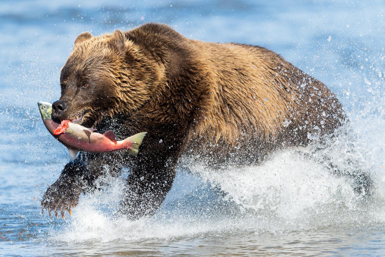 1809Kamchatka-wildlife-8.jpg