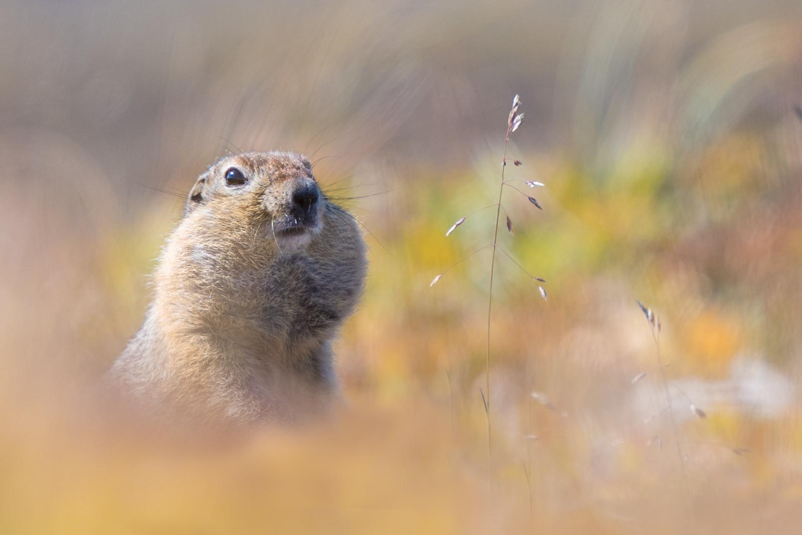 1809Kamchatka-wildlife-9.jpg