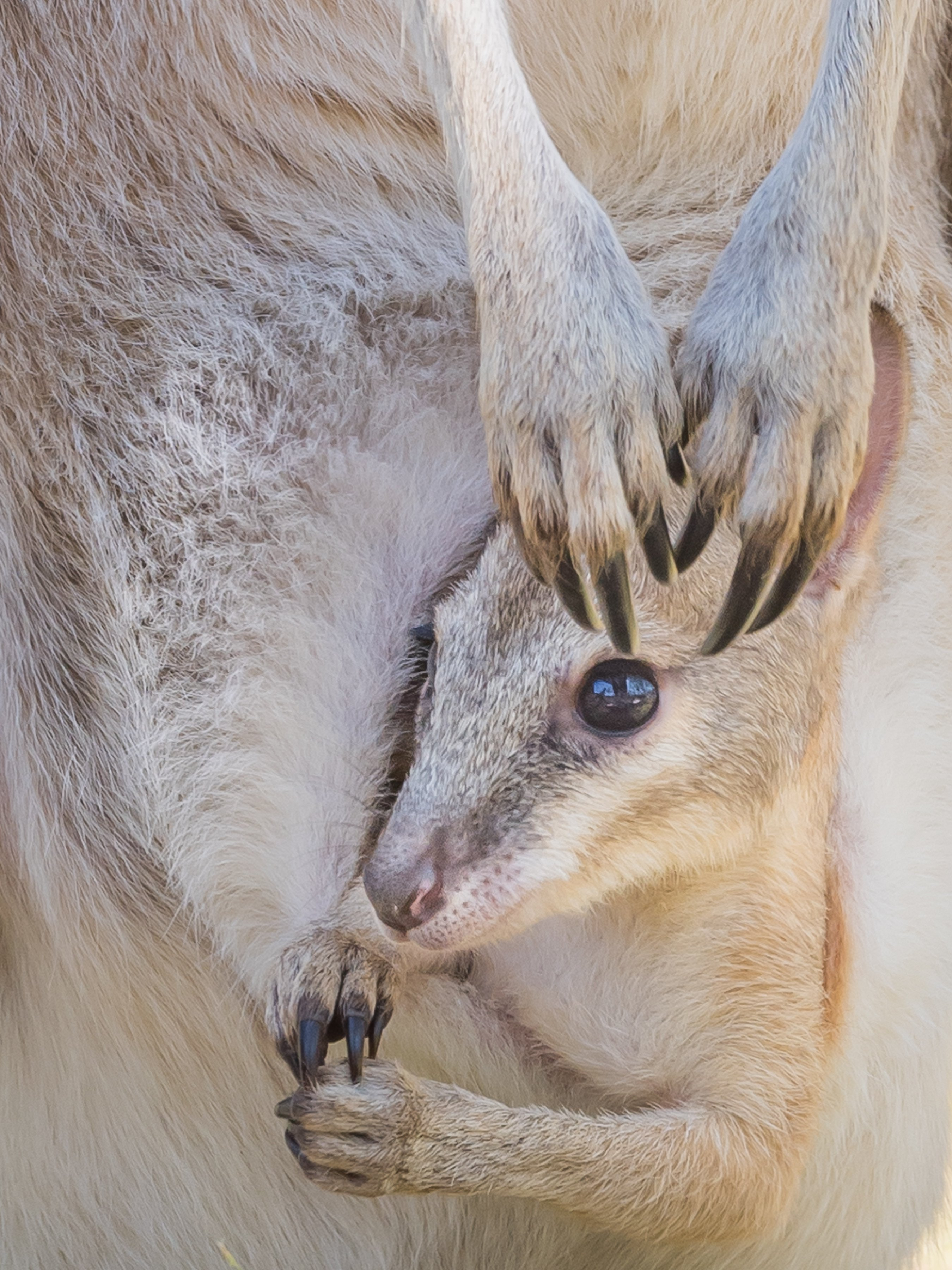 wildlife Australie 3053