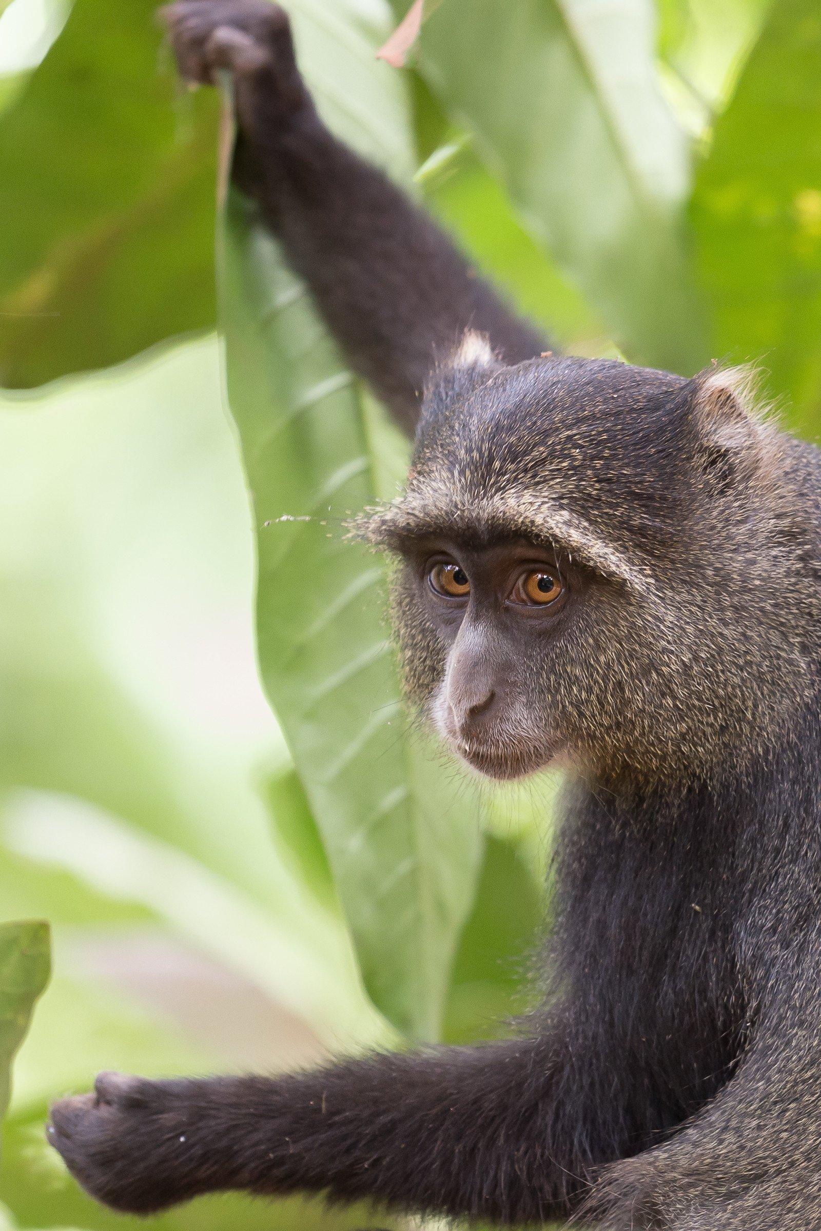 wildlife tanzania 8481