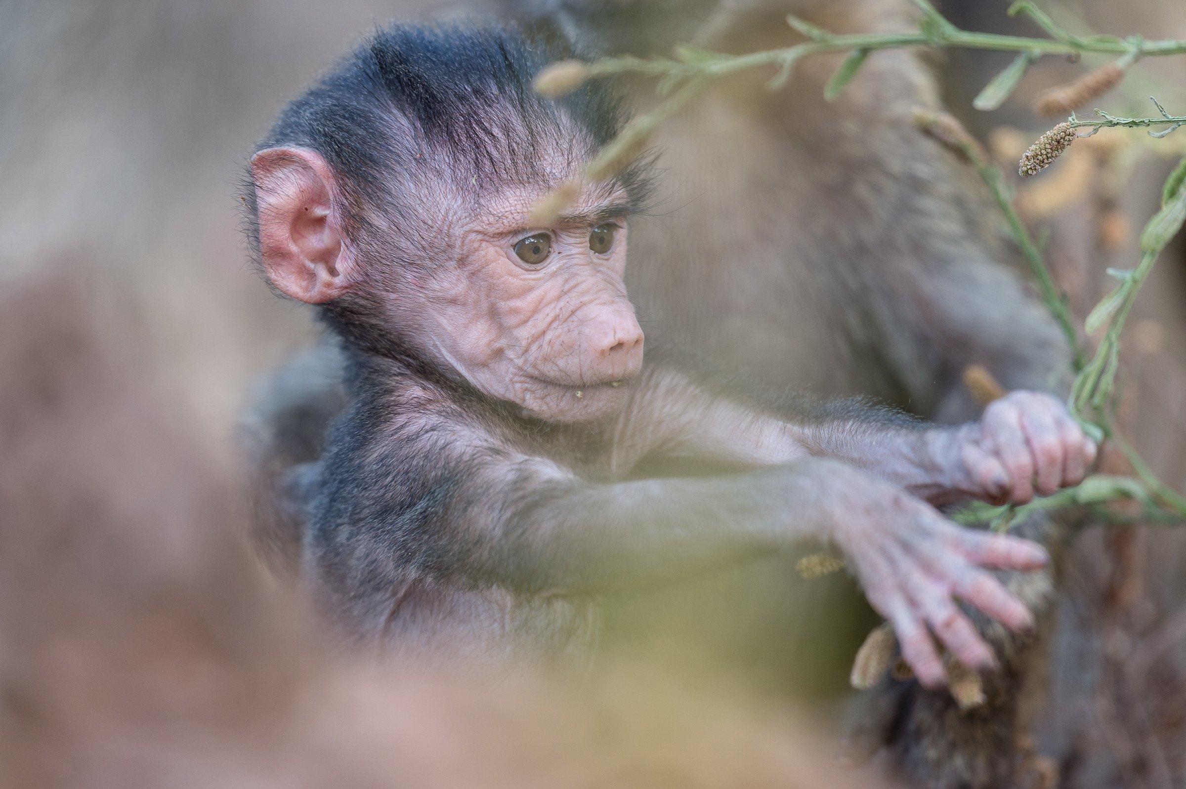 wildlife tanzania 8565