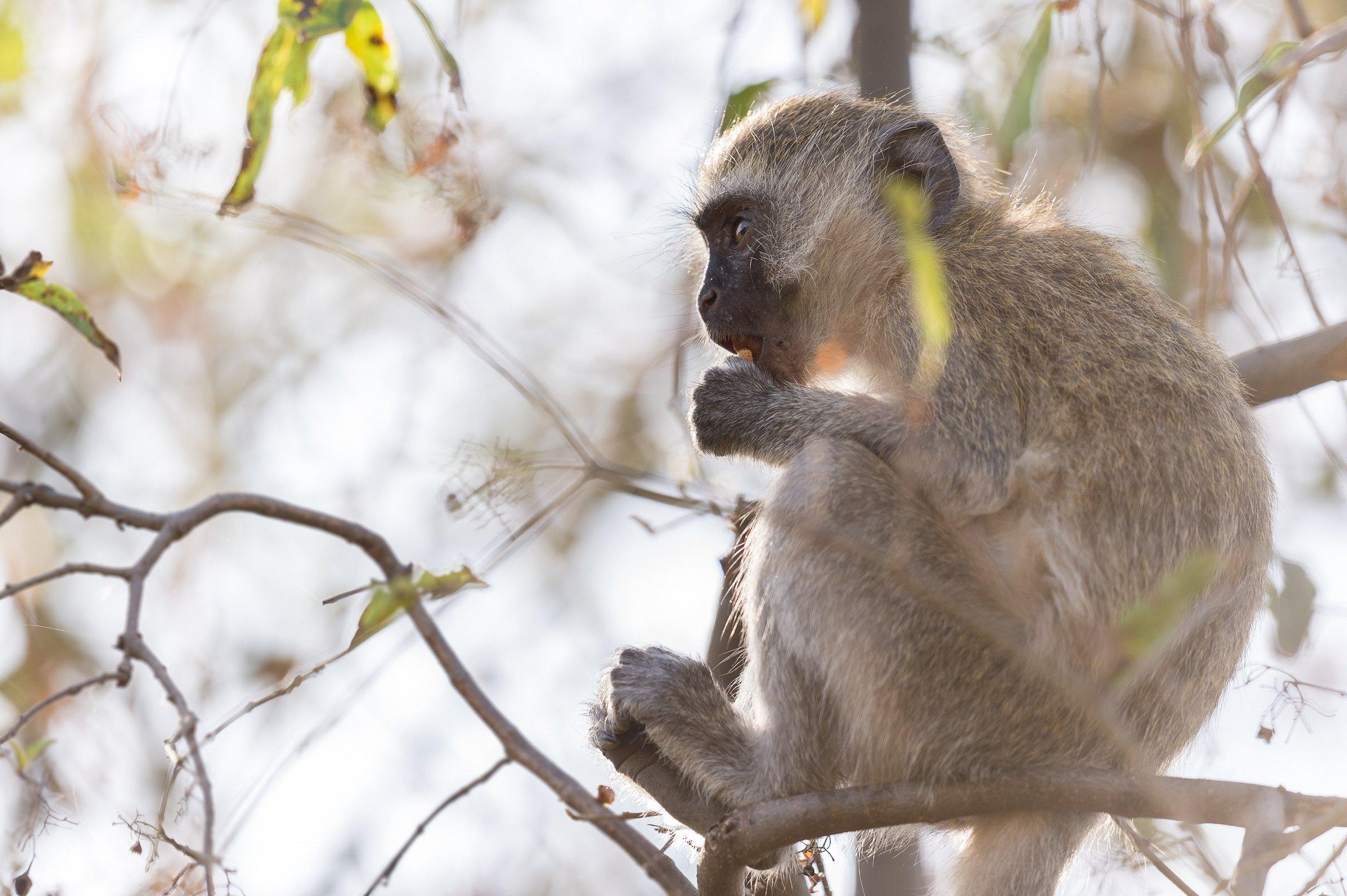 wildlife tanzania 8609