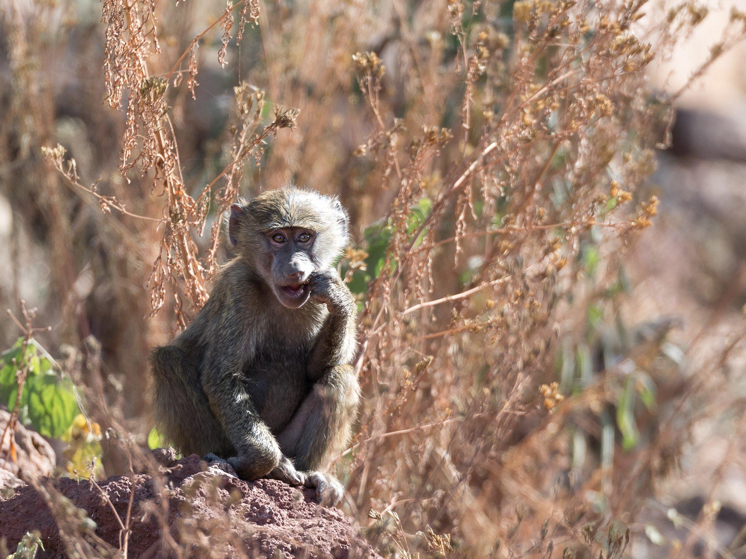 wildlife tanzania 3306