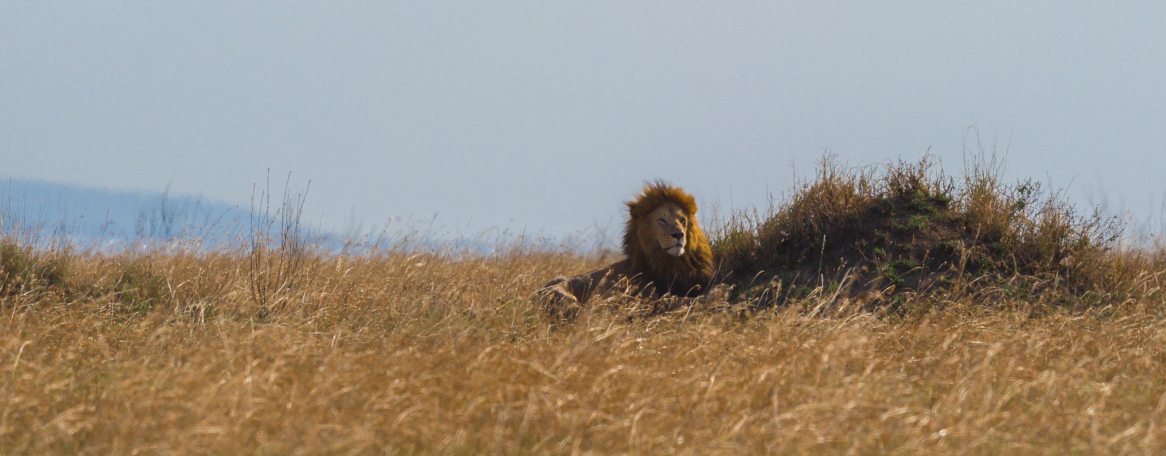 wildlife tanzania 9667