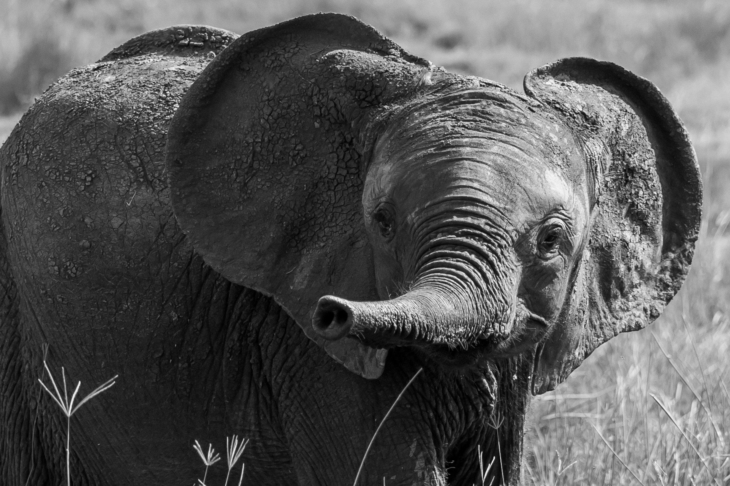 wildlife tanzania 4209