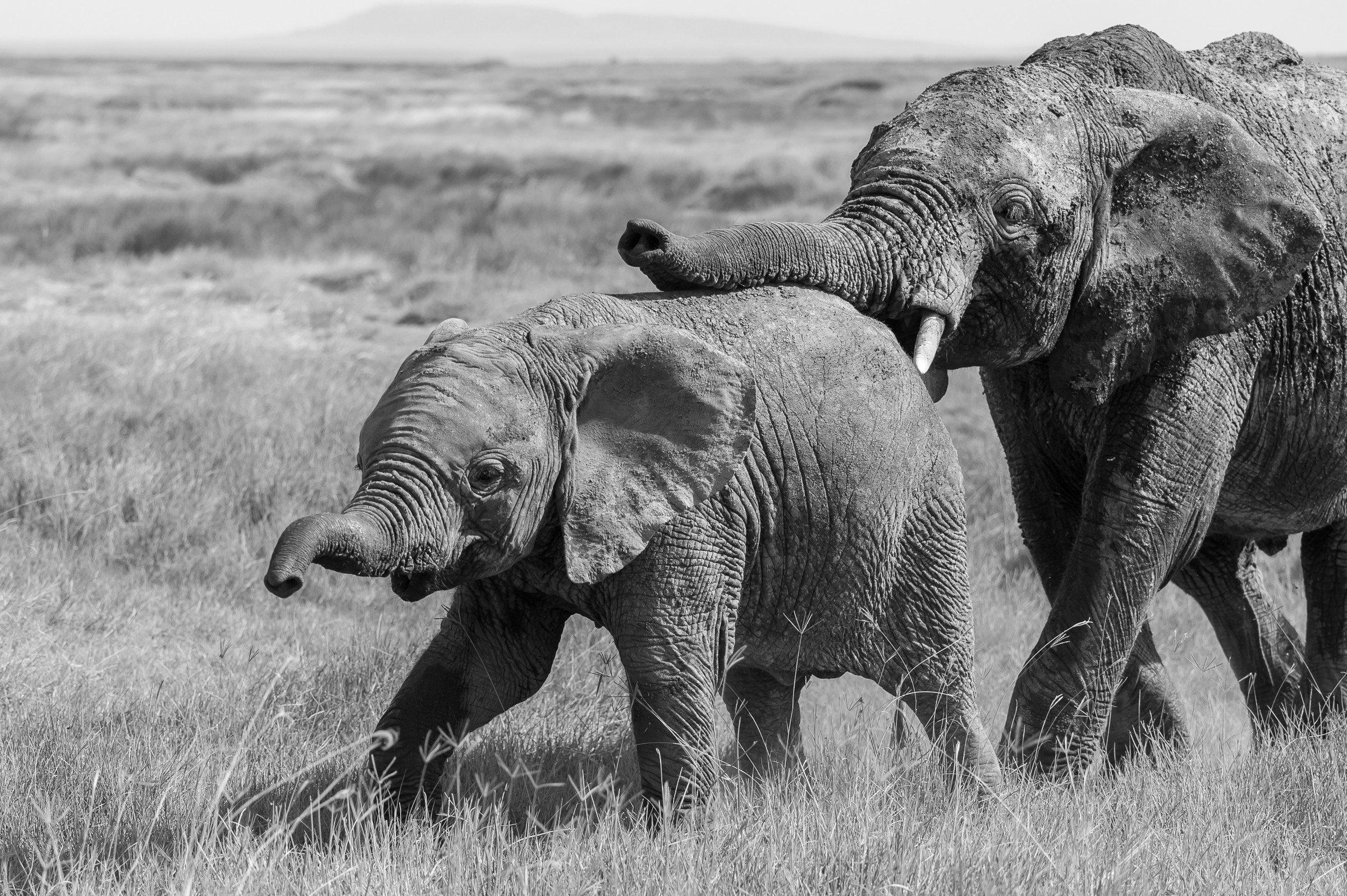 wildlife tanzania 4220