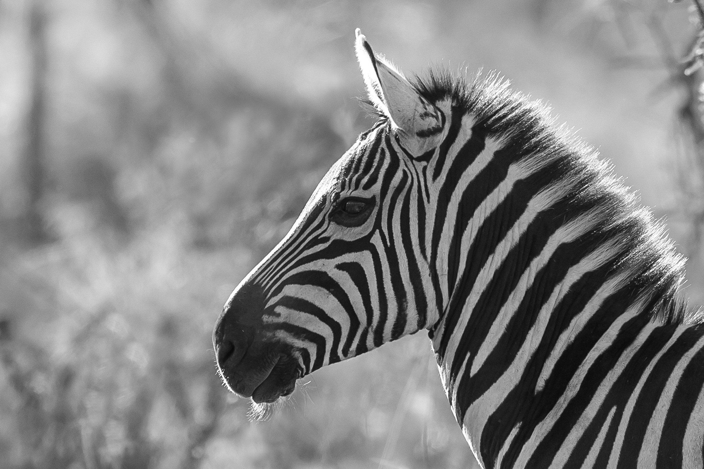 wildlife tanzania 0466