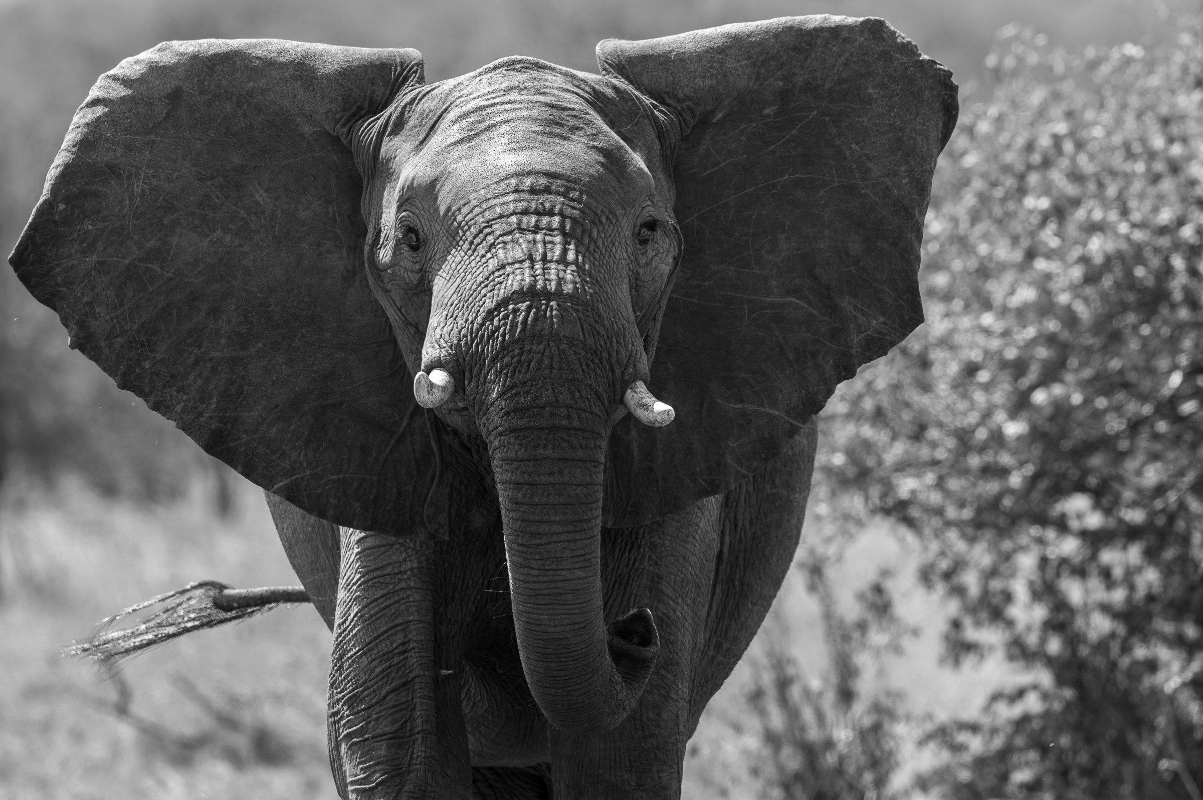 wildlife tanzania 0725