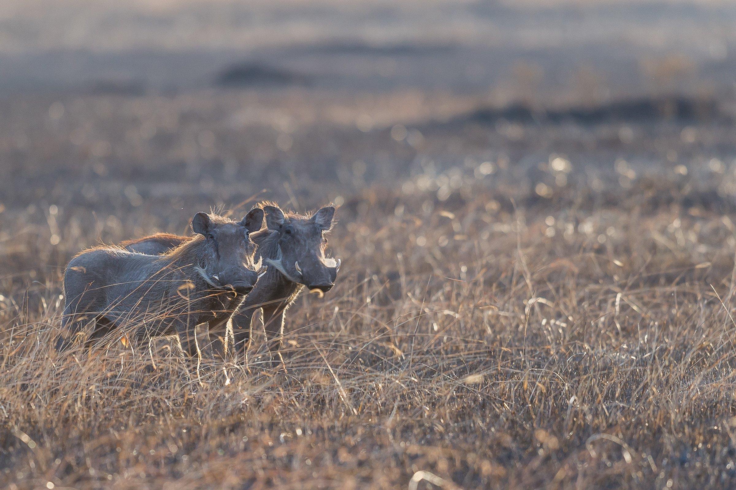 wildlife tanzania 0770