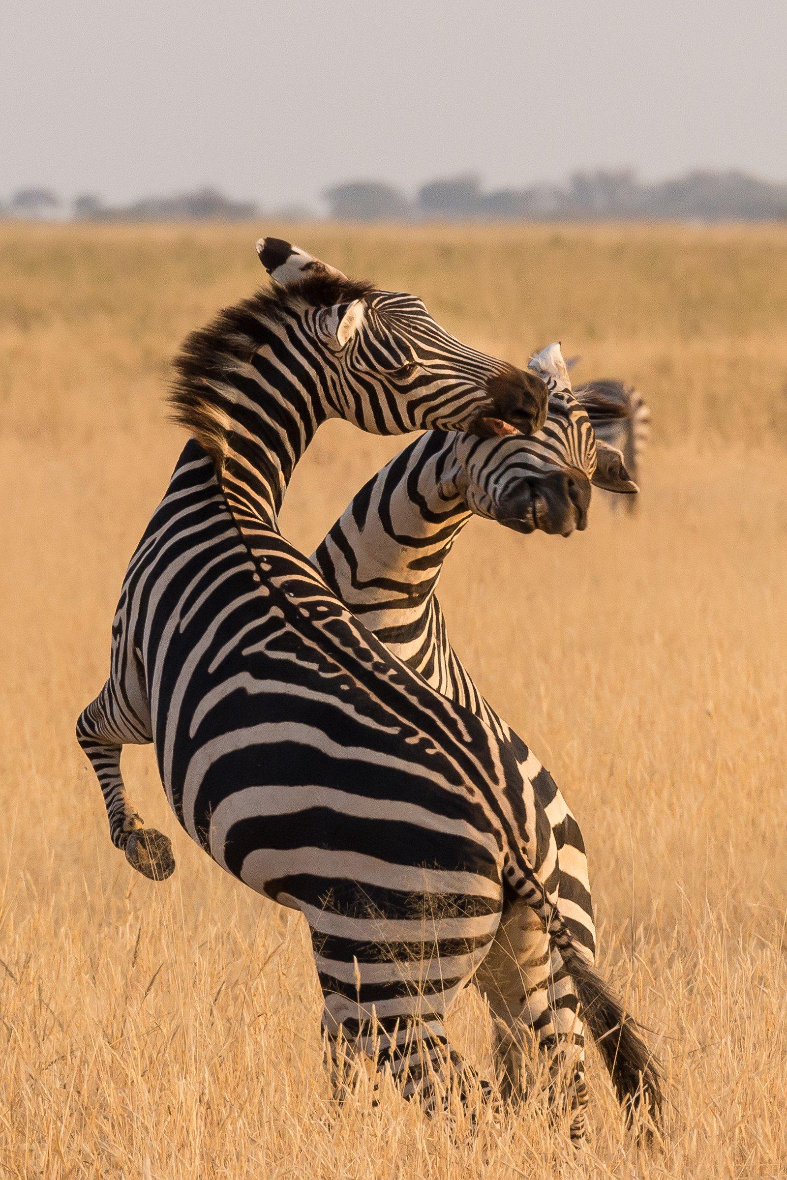 wildlife tanzania 7468