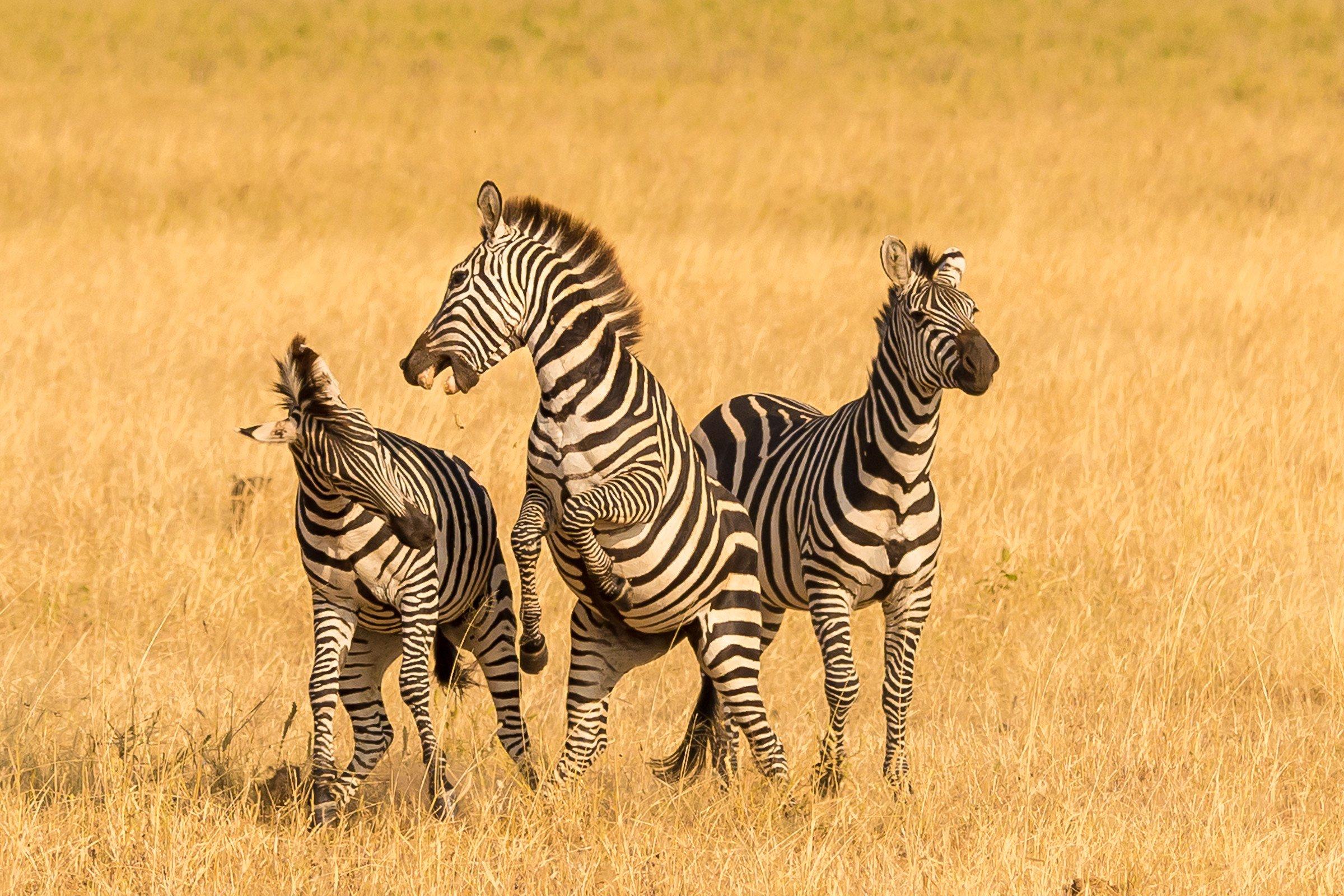 wildlife tanzania 7702
