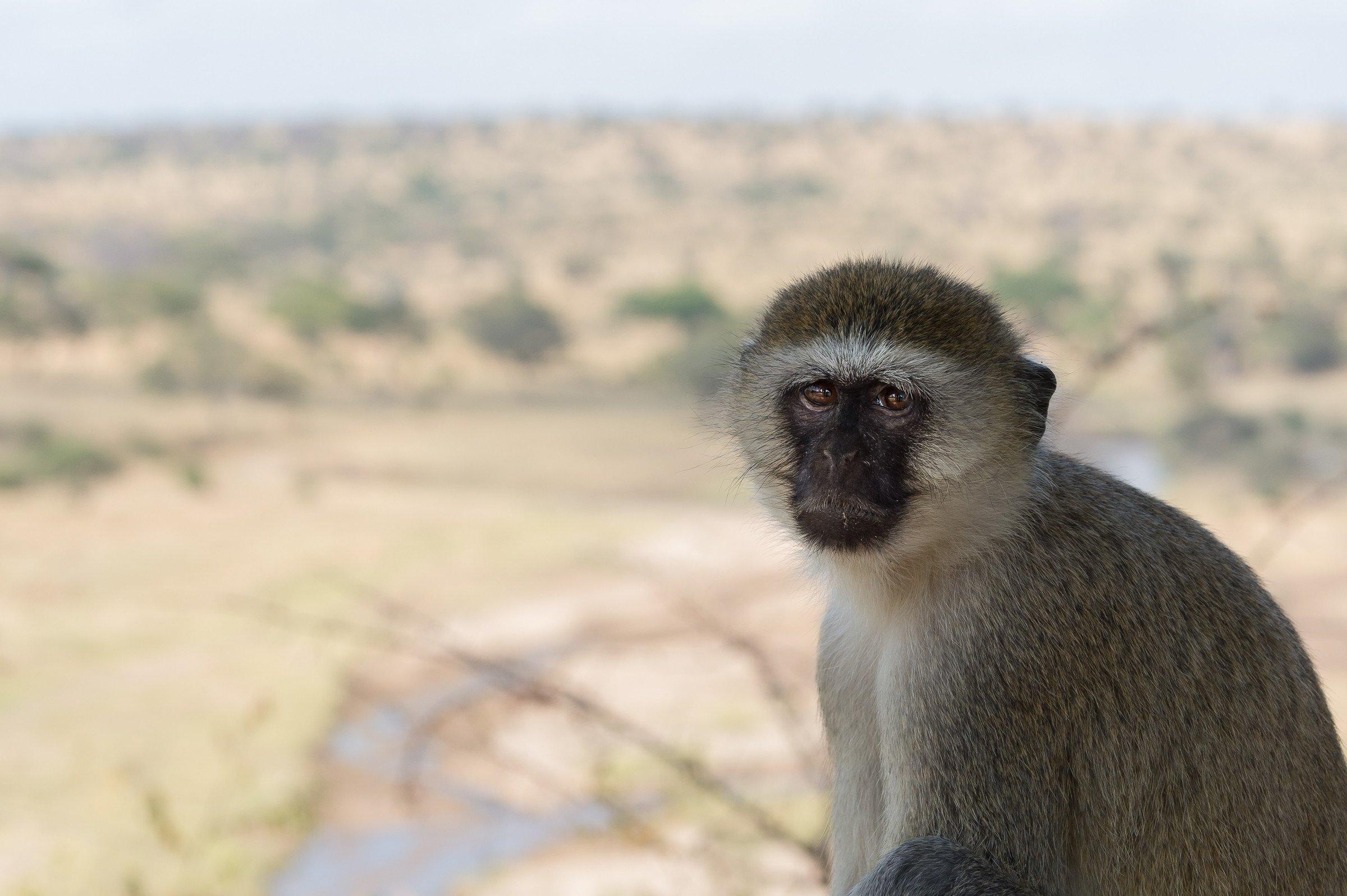 wildlife tanzania 7753
