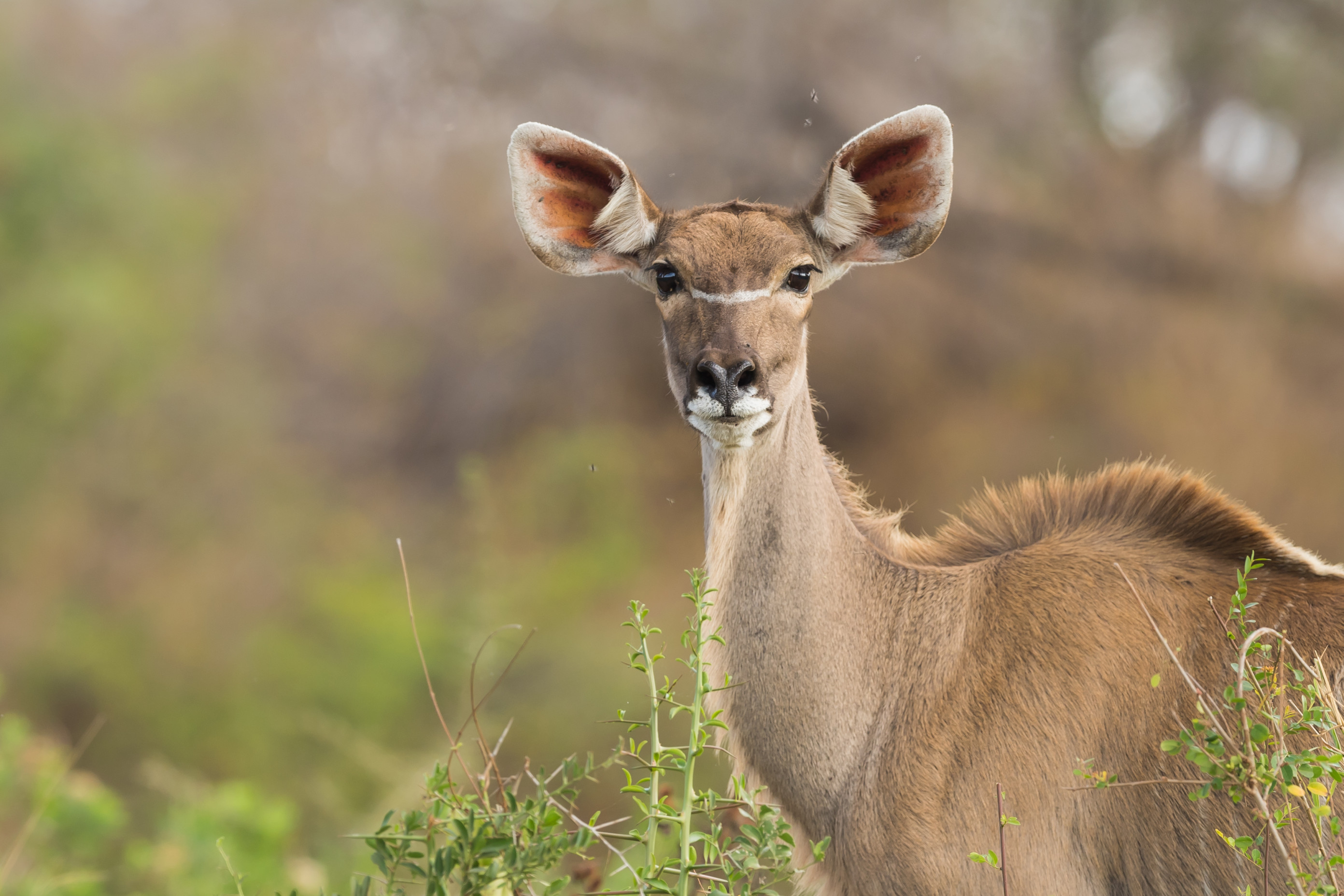 wildlife zimanga 8604