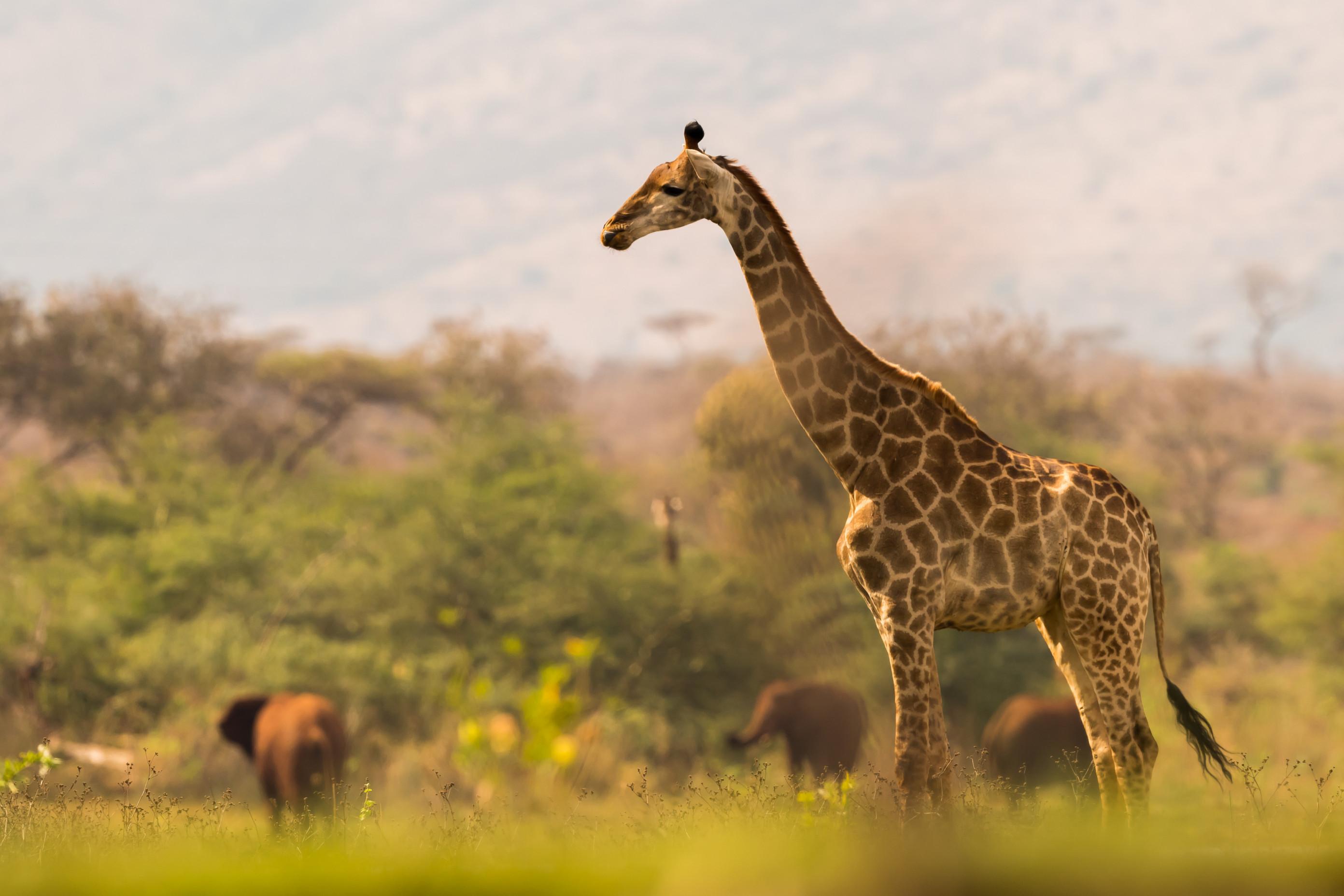 wildlife zimanga 0323