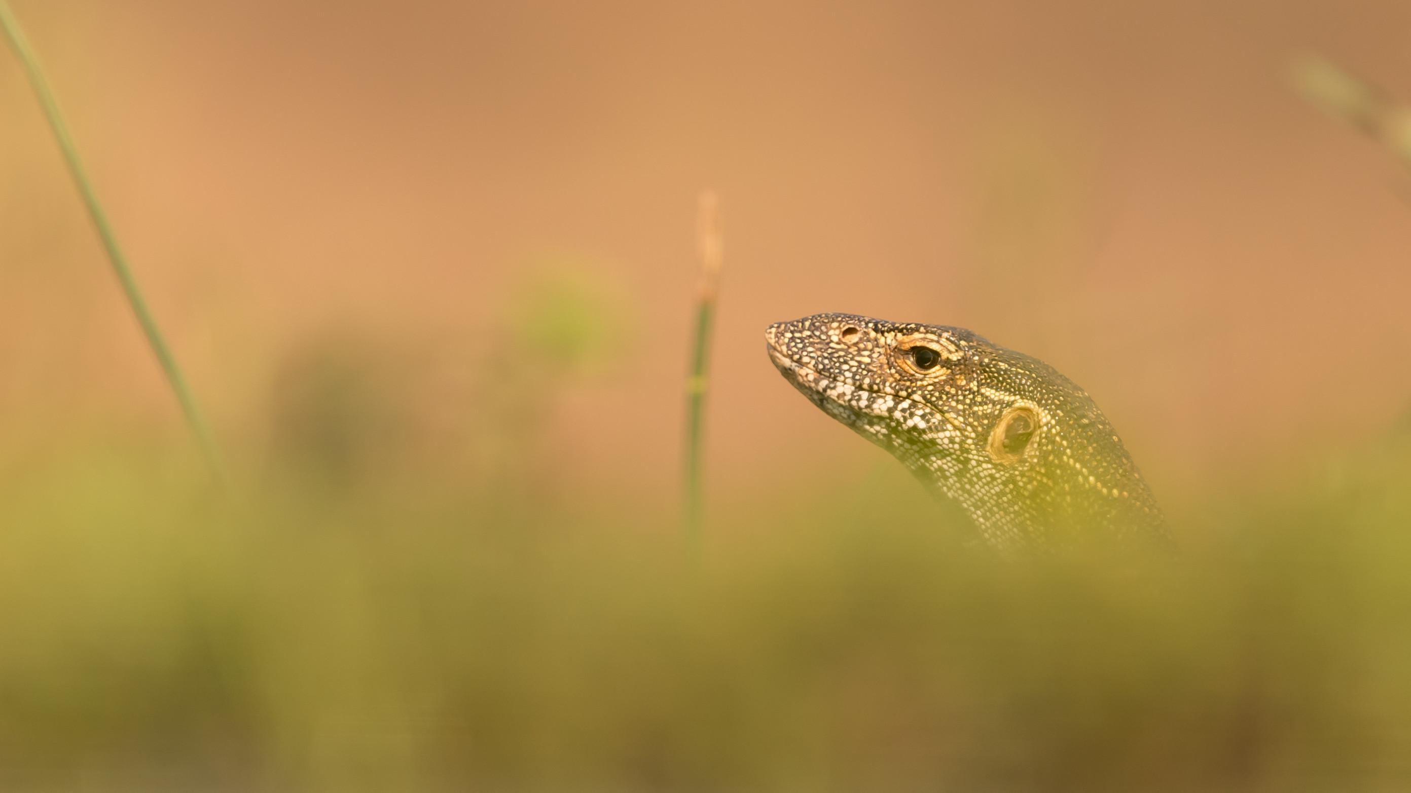 wildlife zimanga 9888