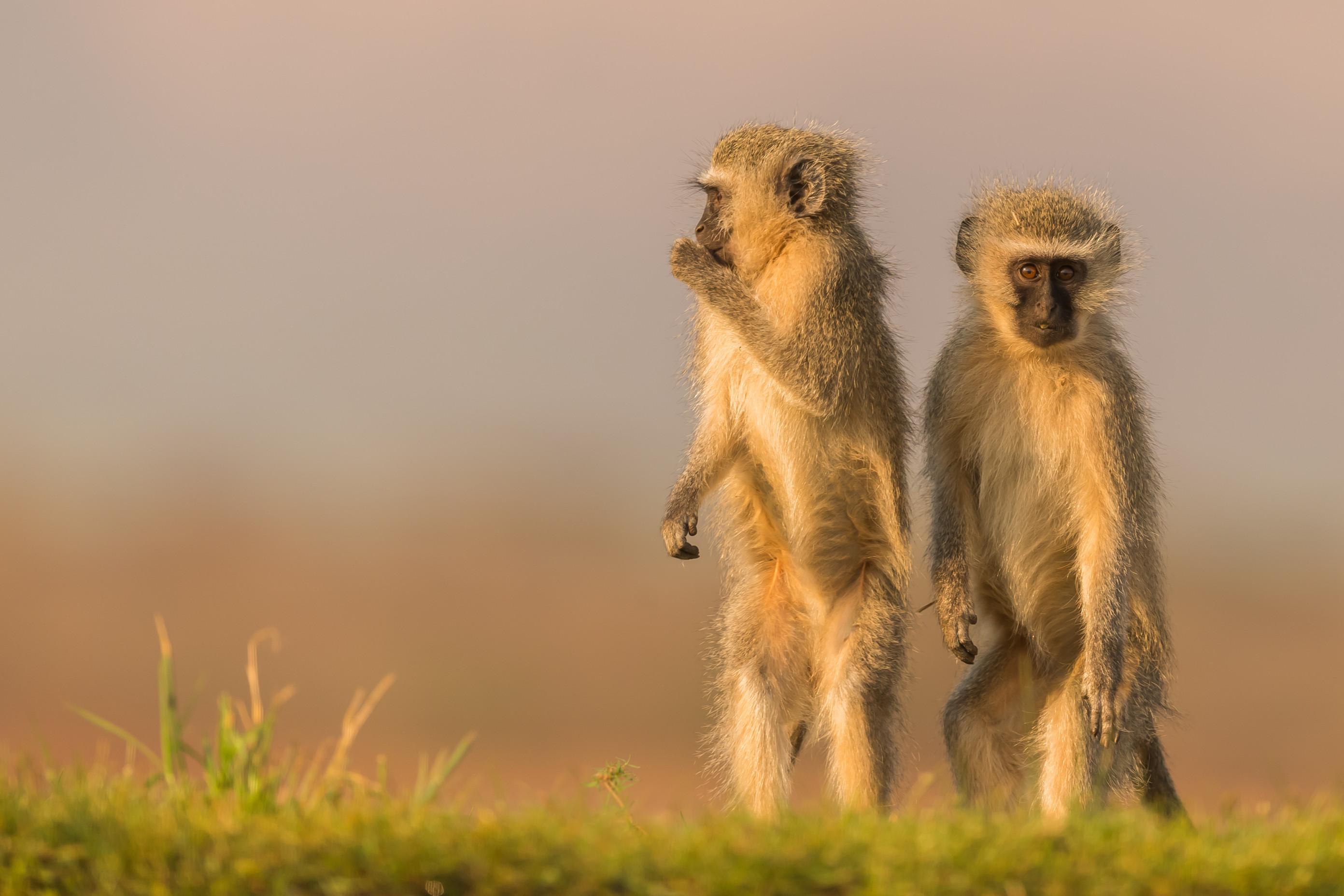 wildlife zimanga 1685