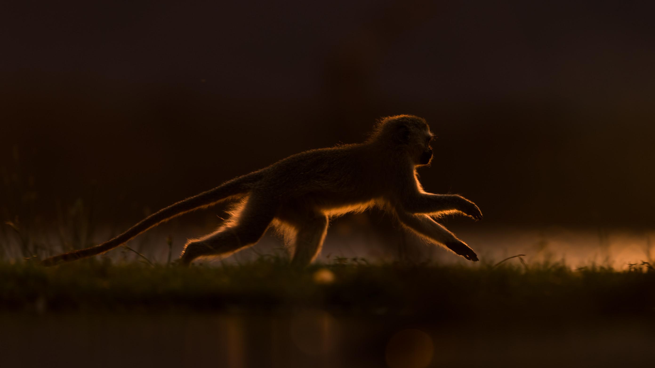 wildlife zimanga 2346
