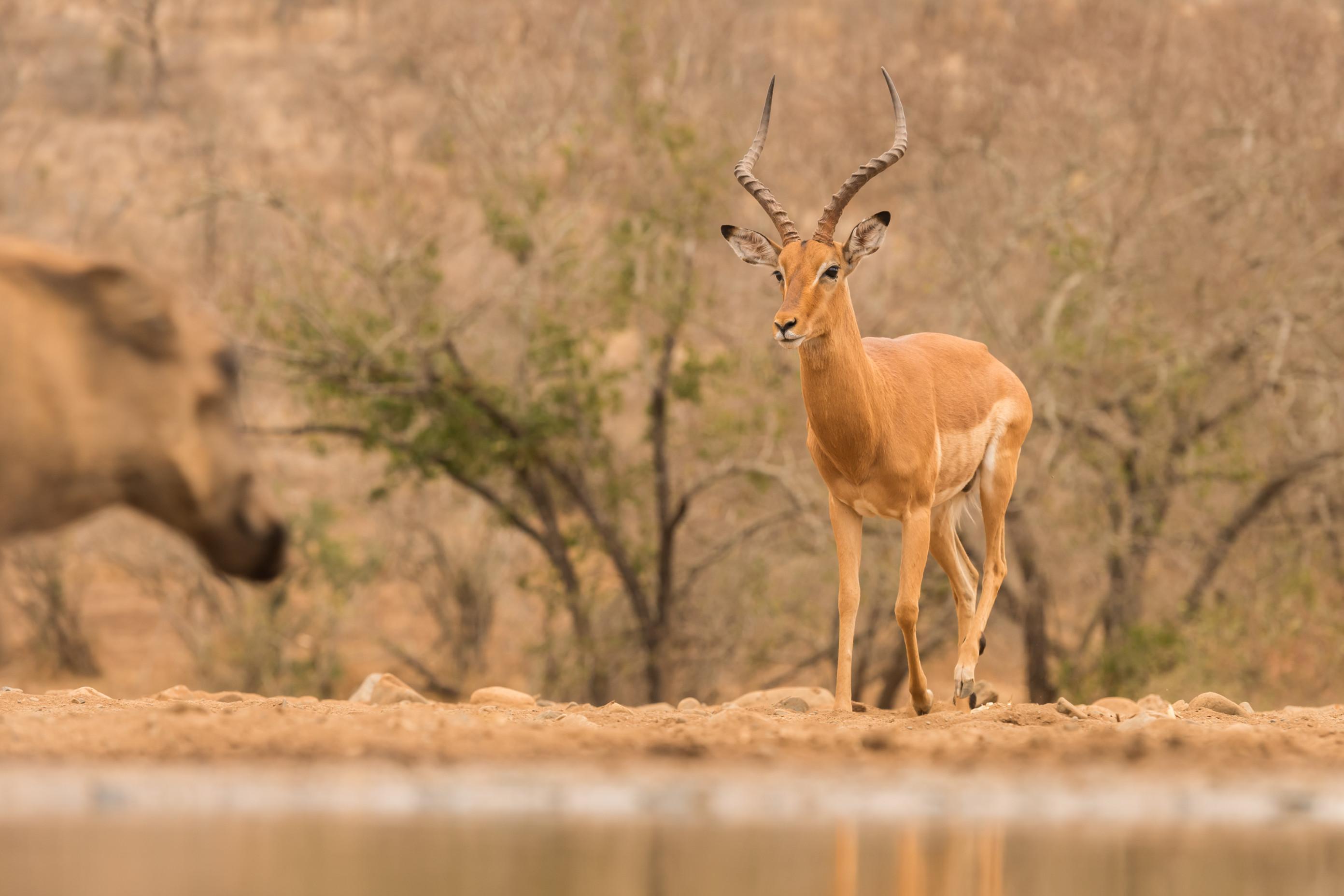 wildlife zimanga 3062