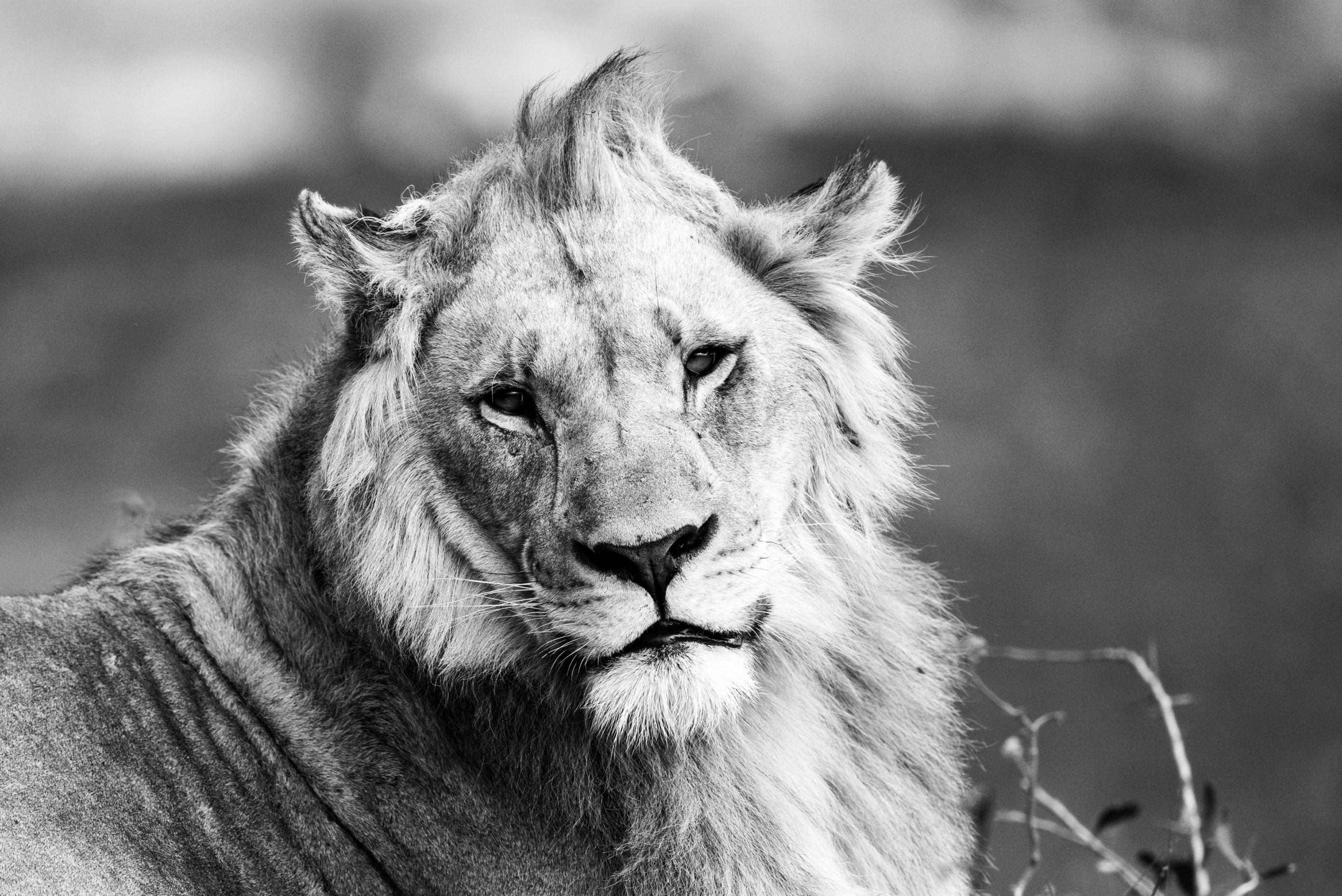 wildlife zimanga 5057