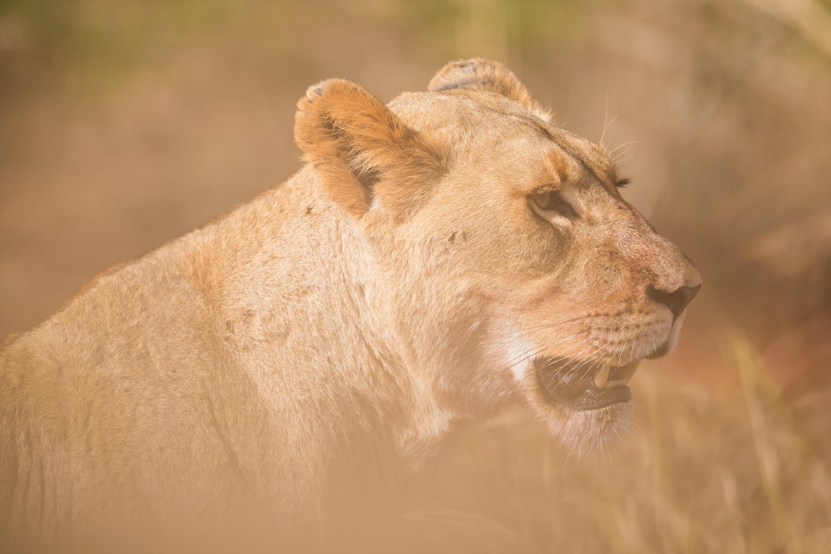 wildlife zimanga 5112