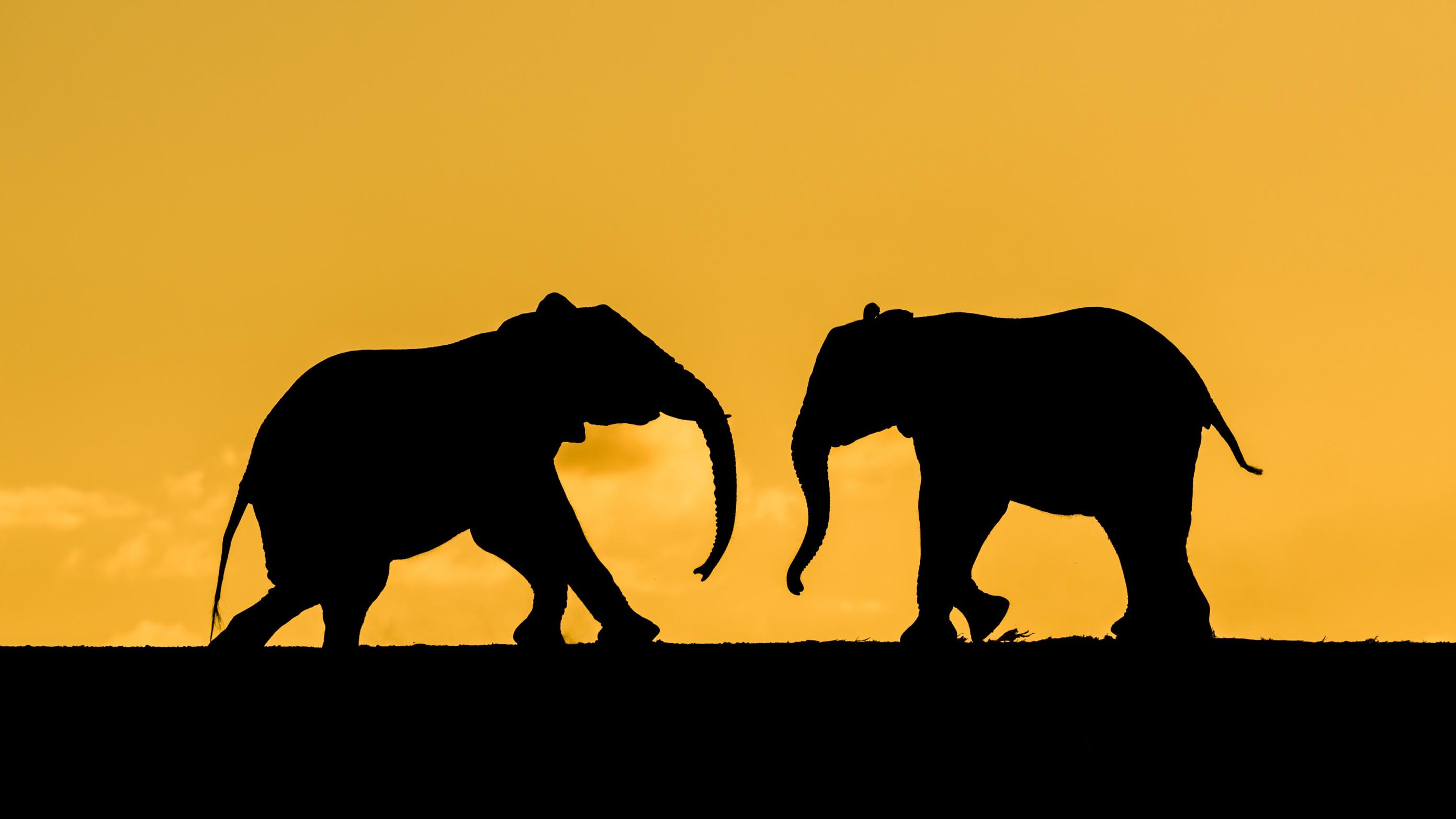 wildlife zimanga 5354