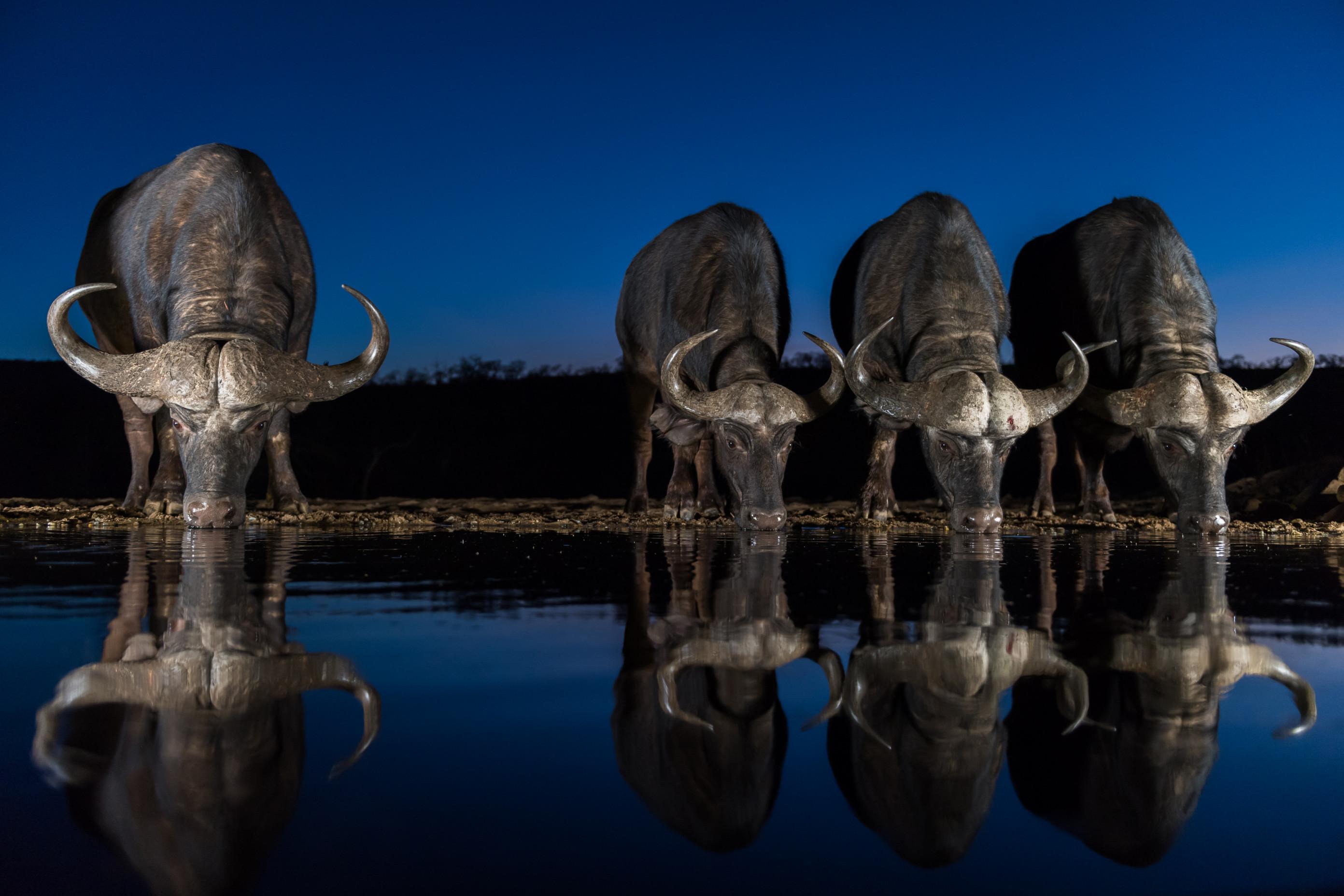 wildlife zimanga 3979