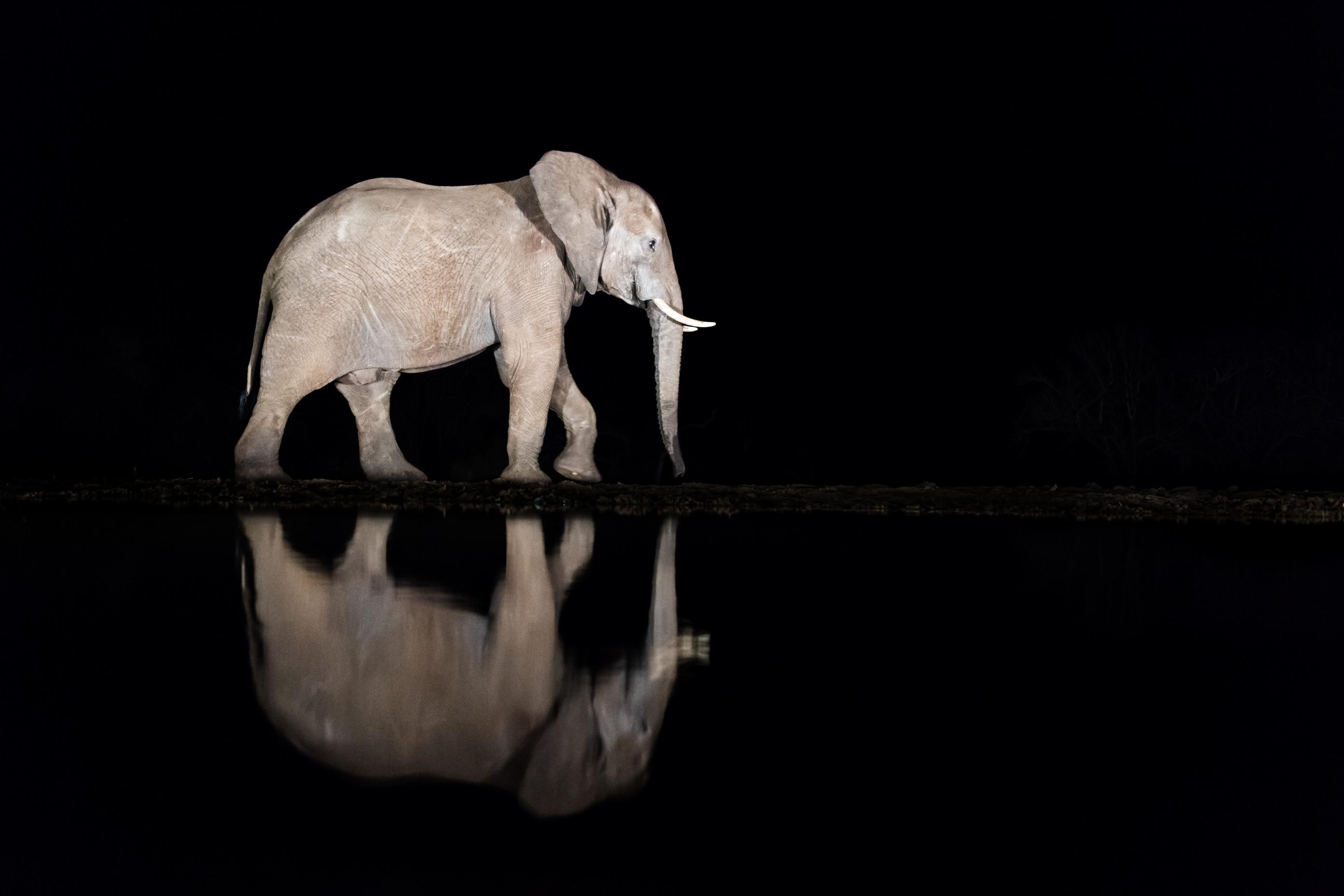 wildlife zimanga 4040