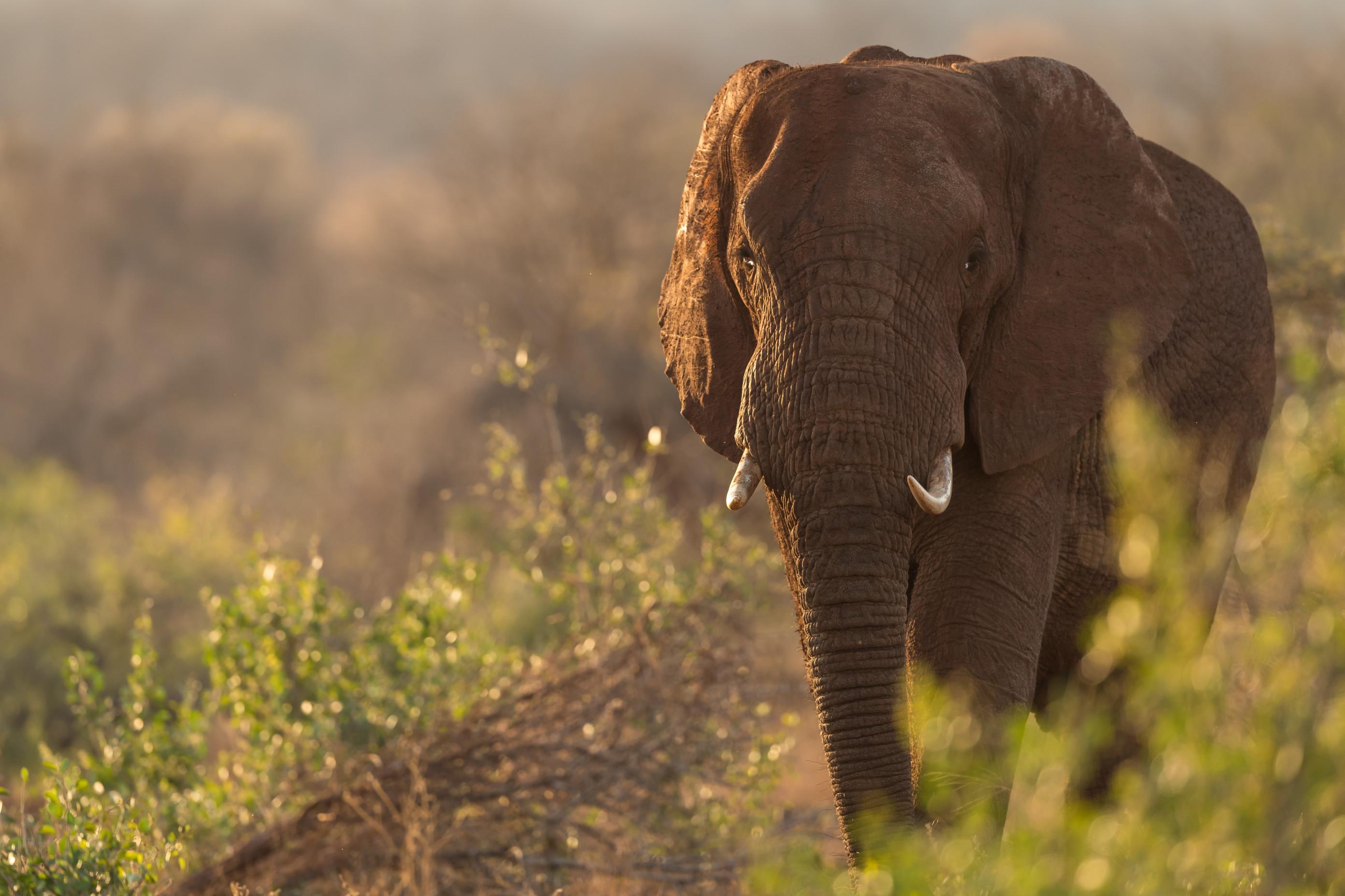 wildlife zimanga 5489