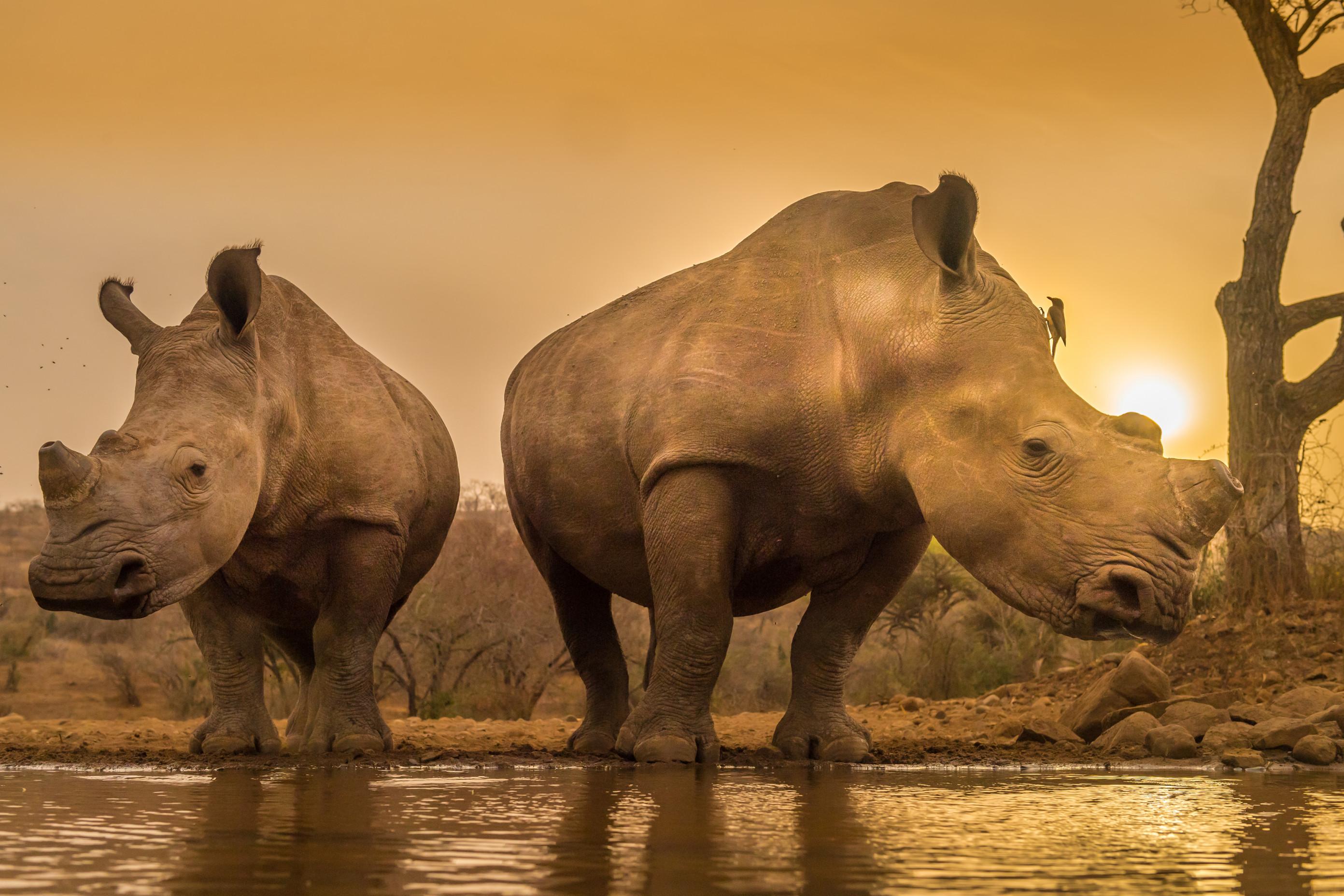 wildlife zimanga 6794