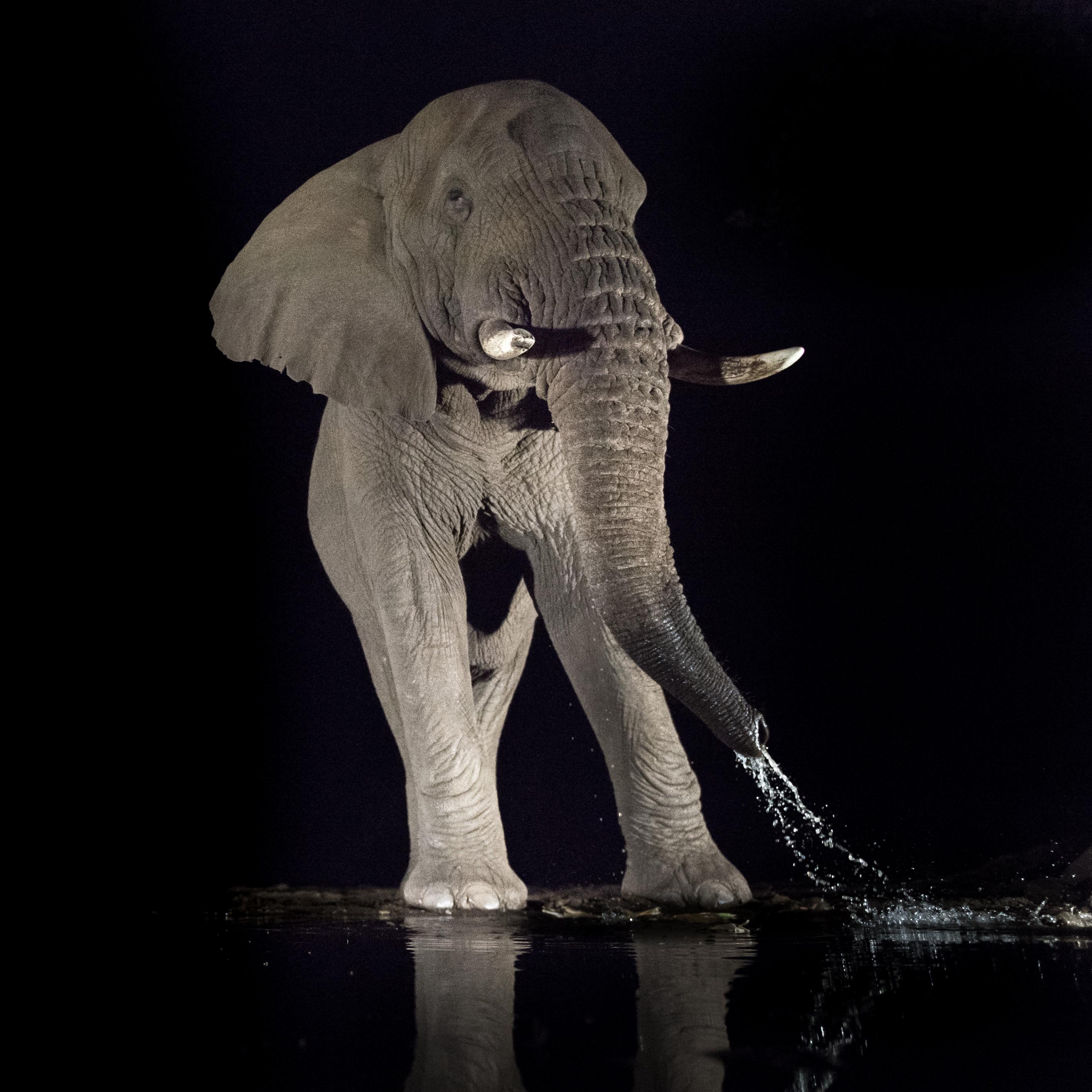 wildlife zimanga 7000