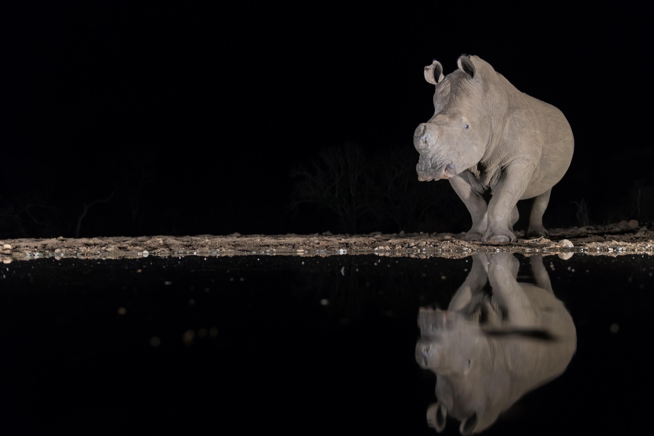 wildlife zimanga 7027