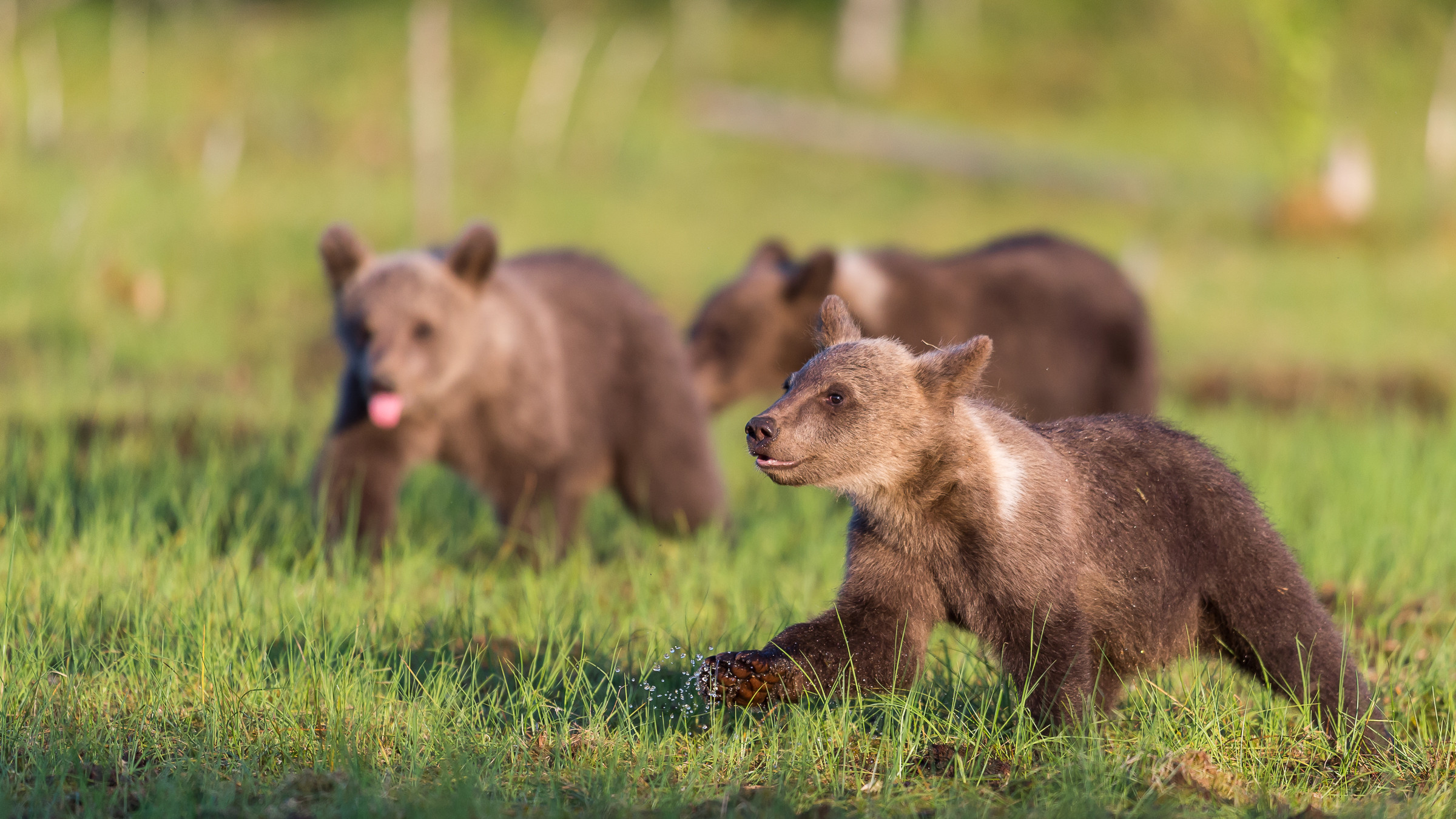 wildlife europa 0192