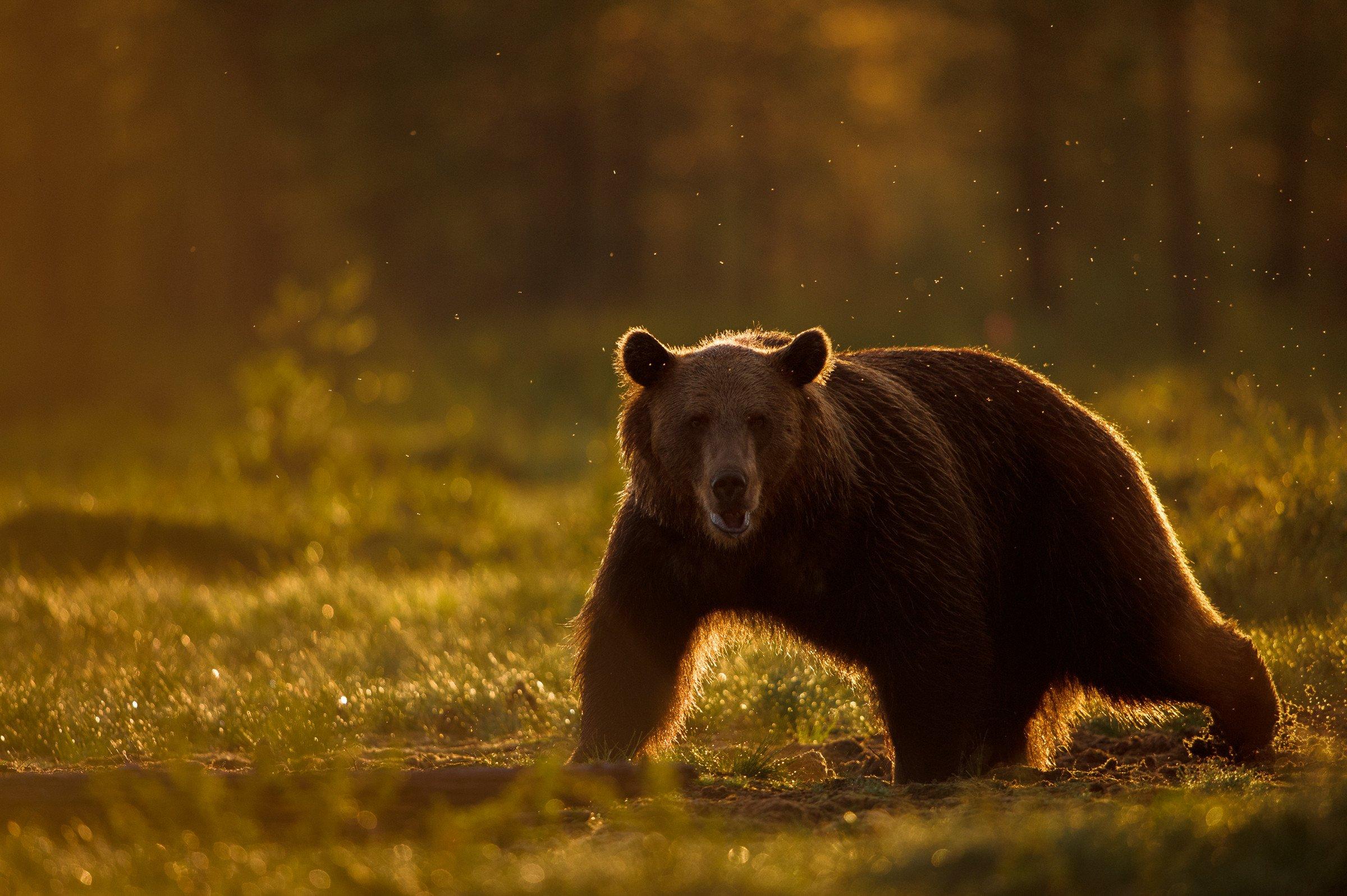 wildlife europa 3376