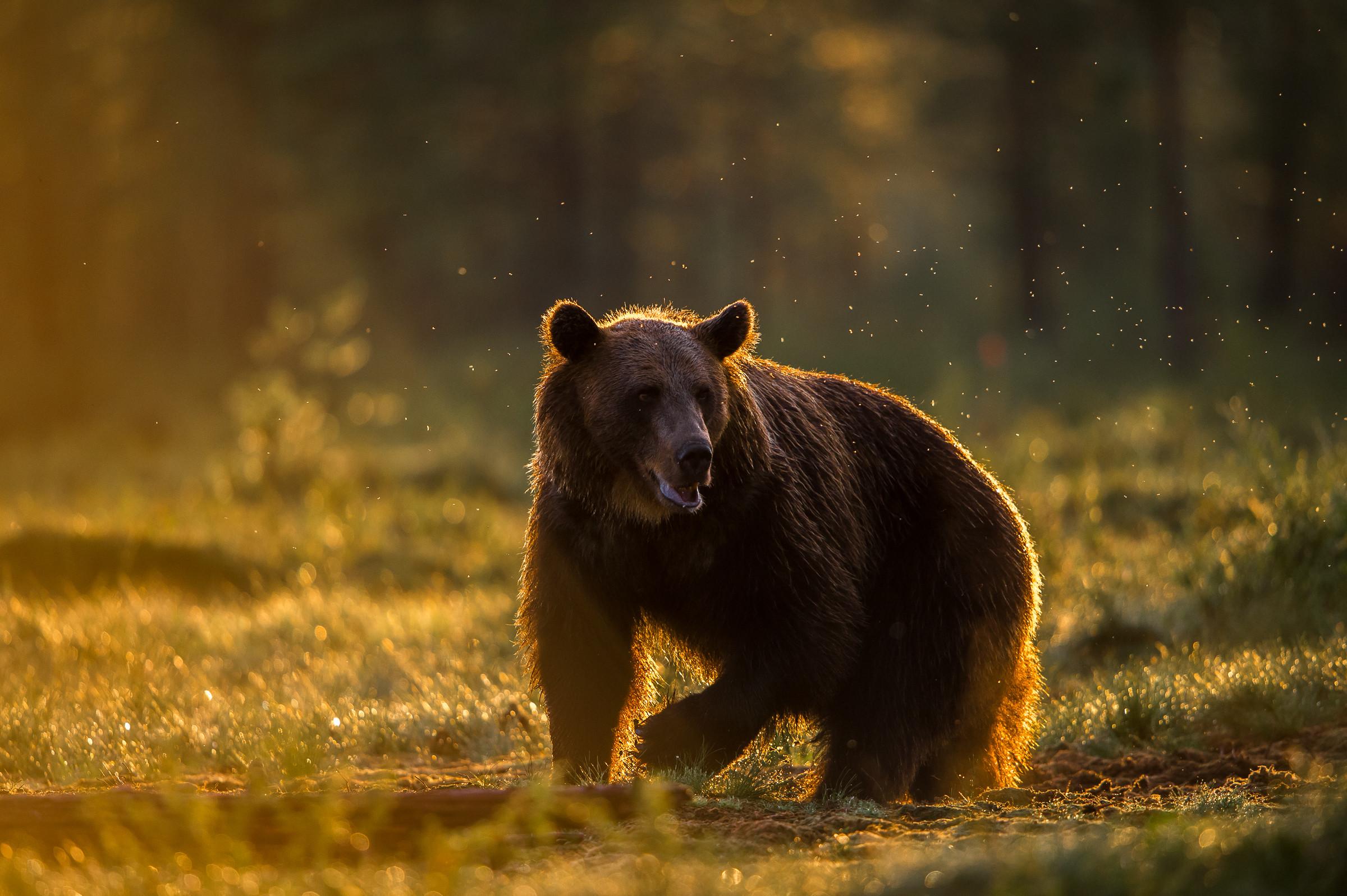 wildlife europa 3378