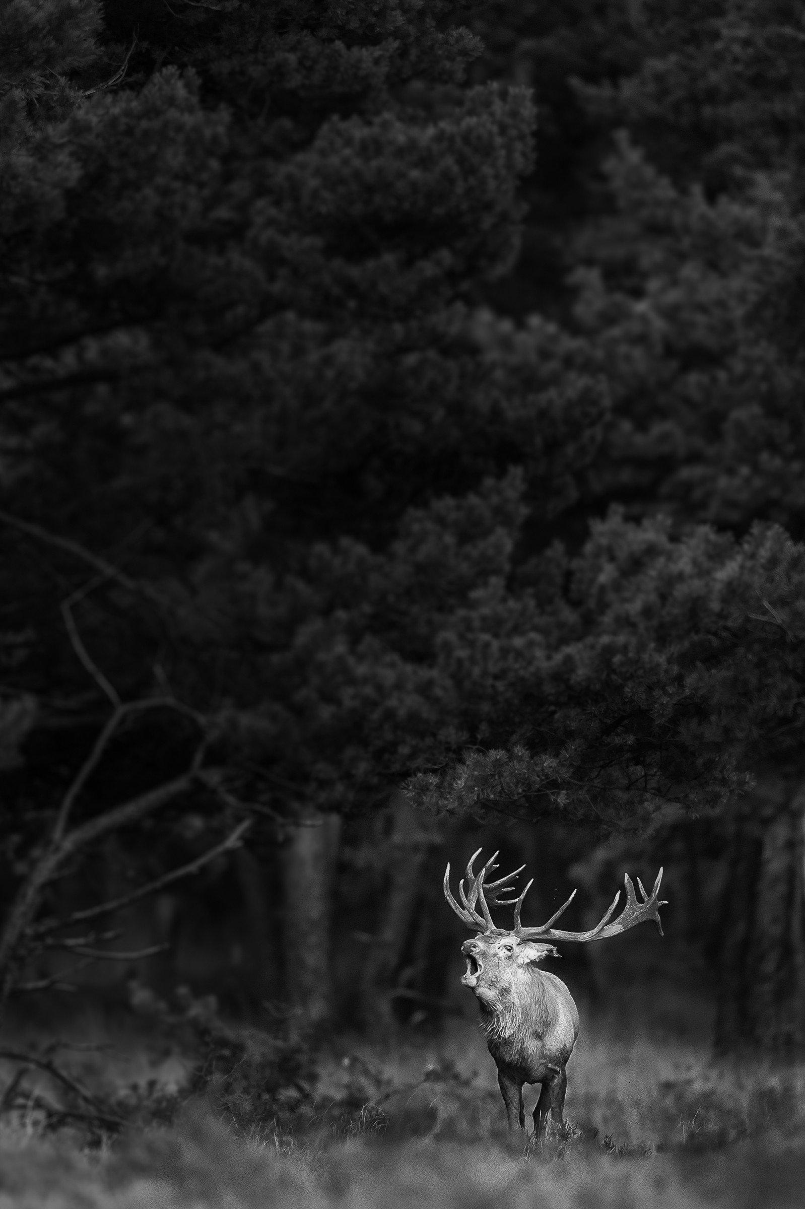 wildlife europa 4161