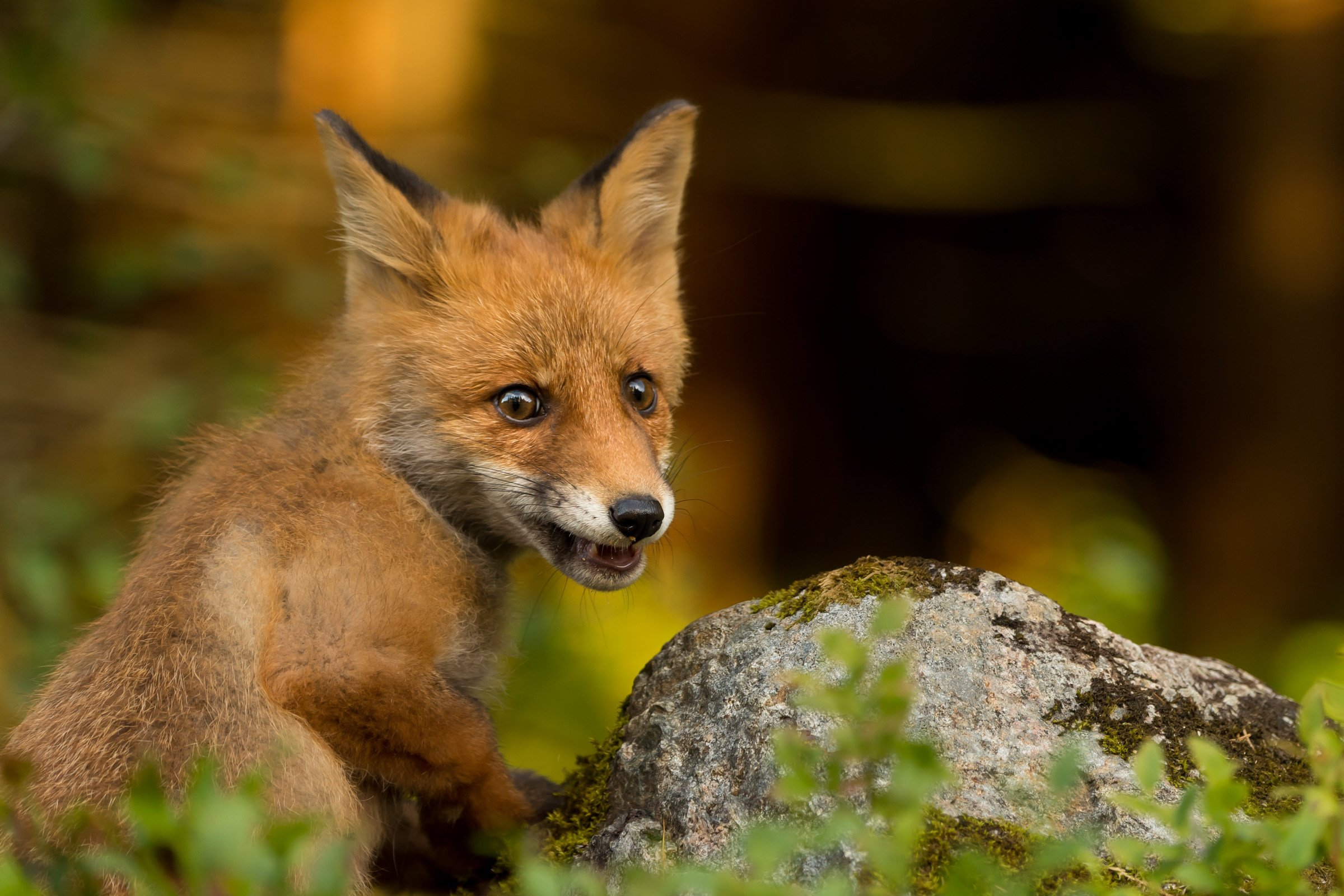 wildlife europa 2678