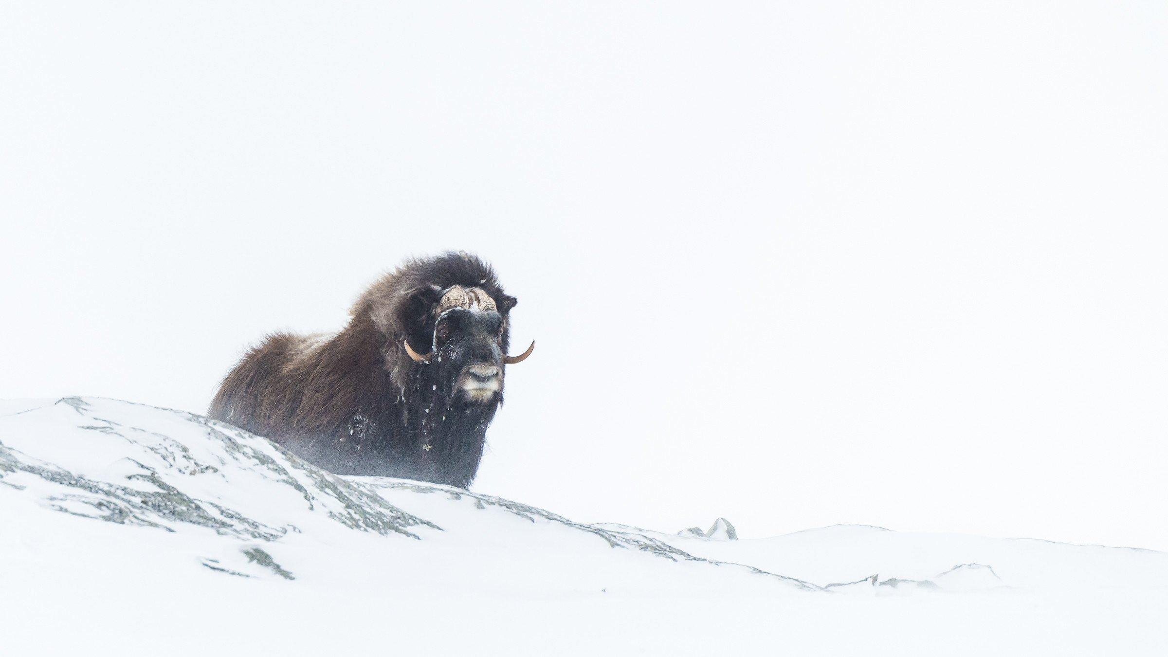 wildlife Europa 4523