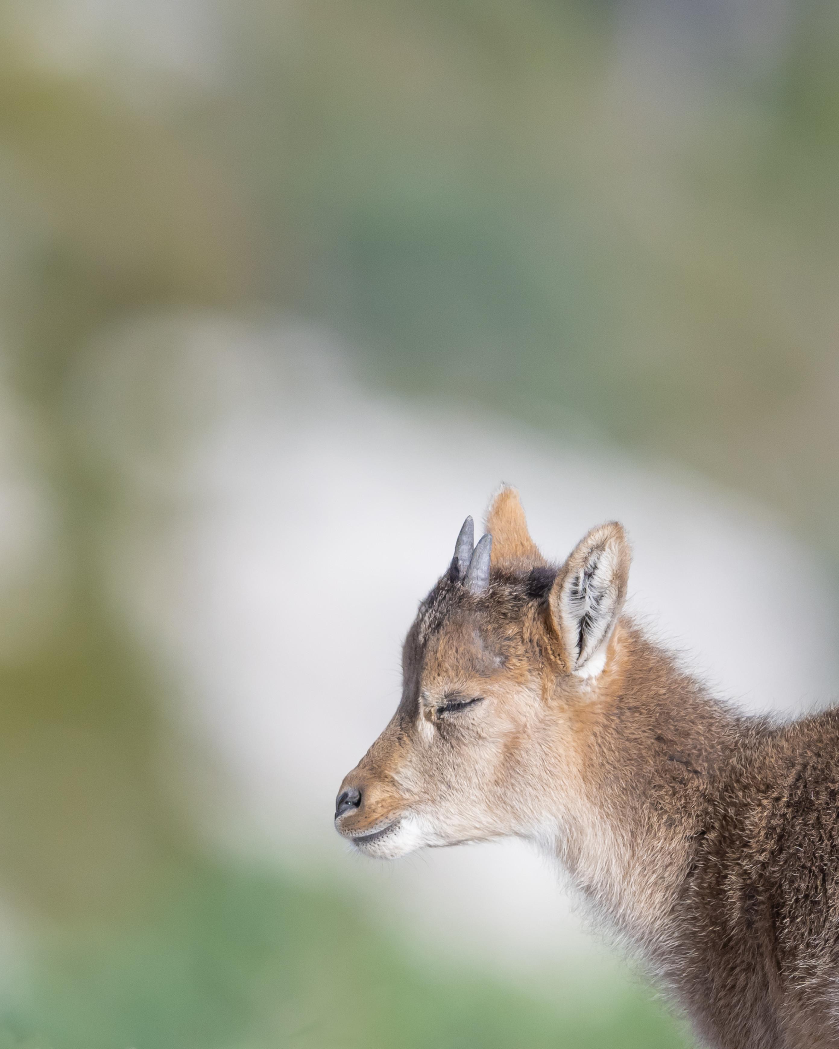 wildlife europa 9158
