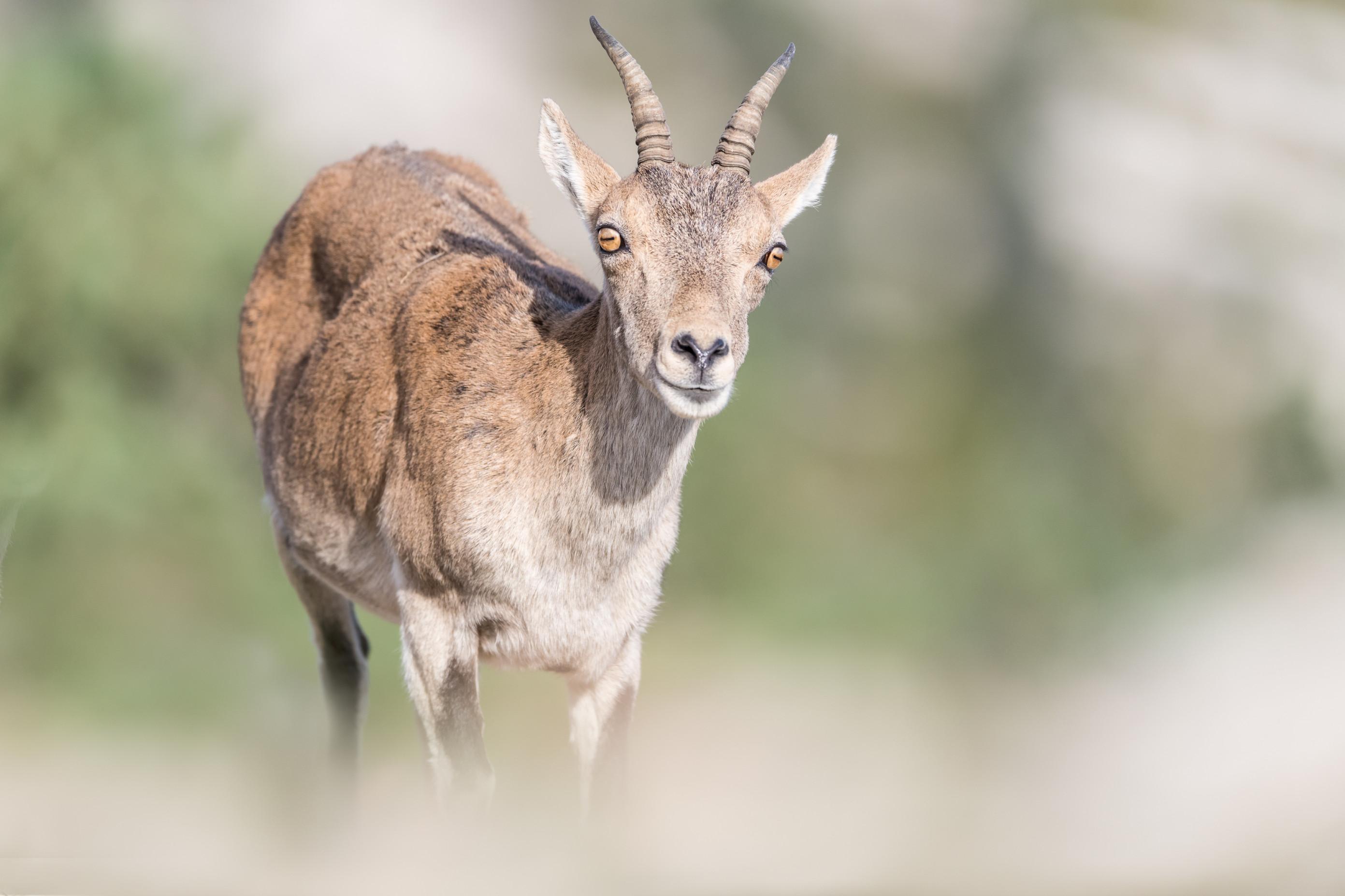 wildlife europa 9284