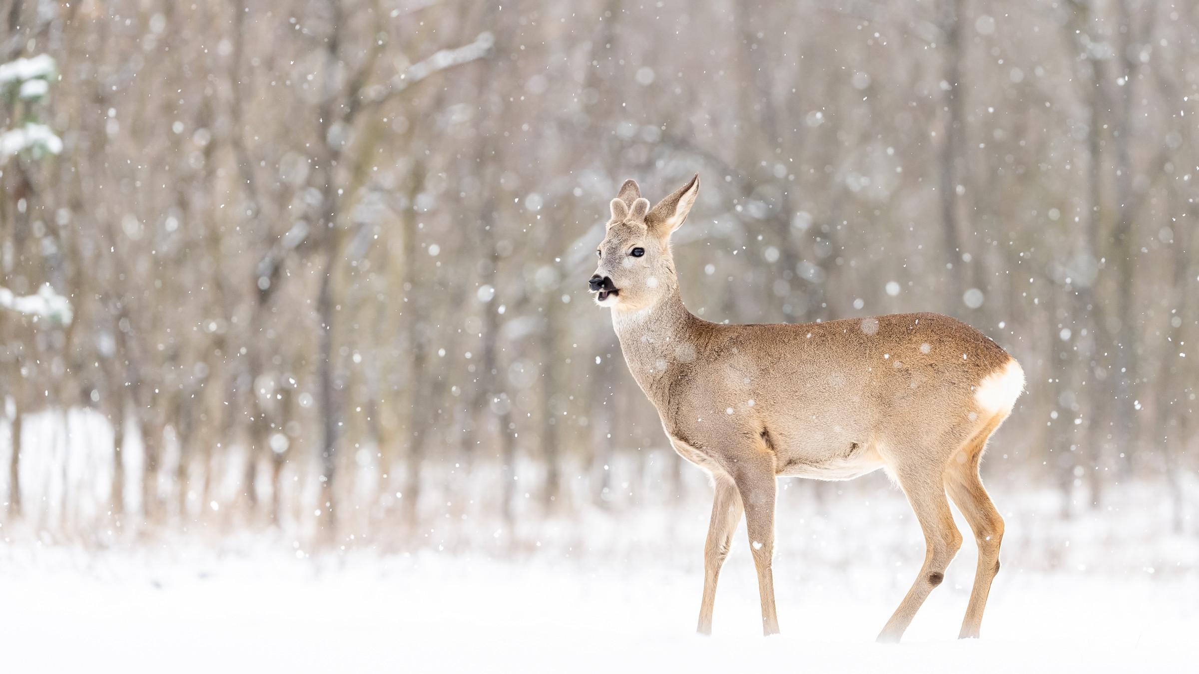 wildlife europa 5615
