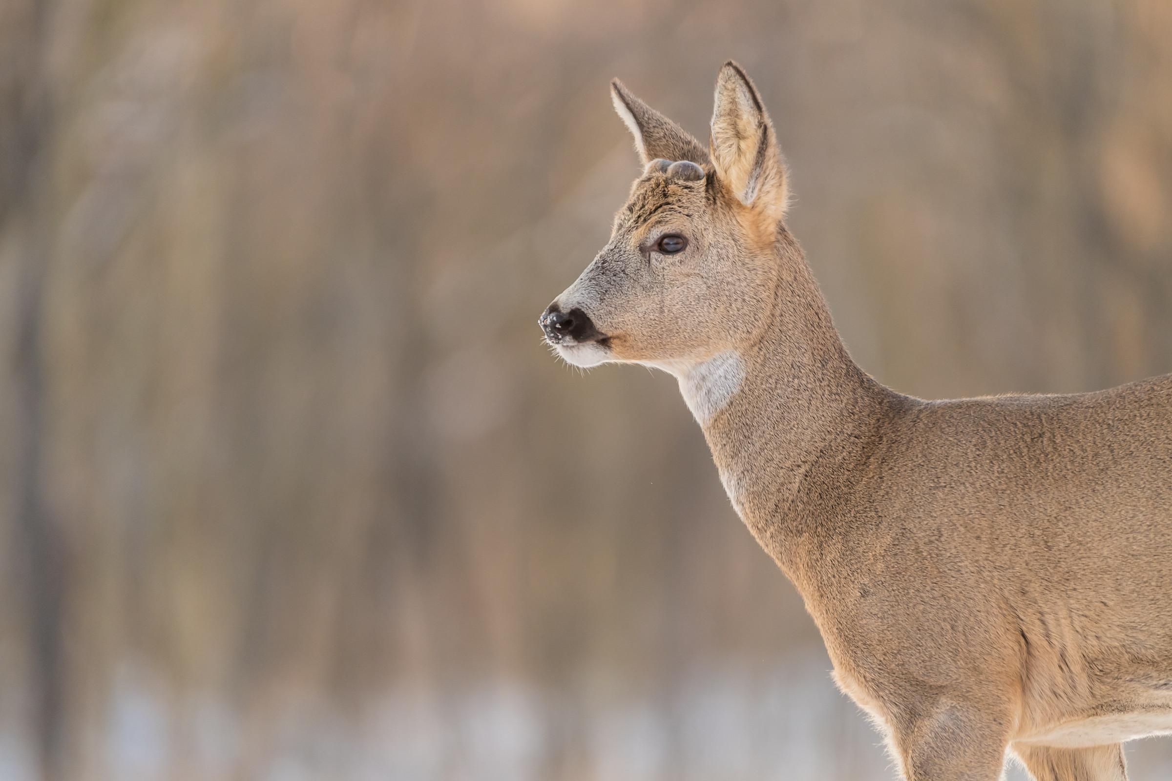 wildlife europa 6782