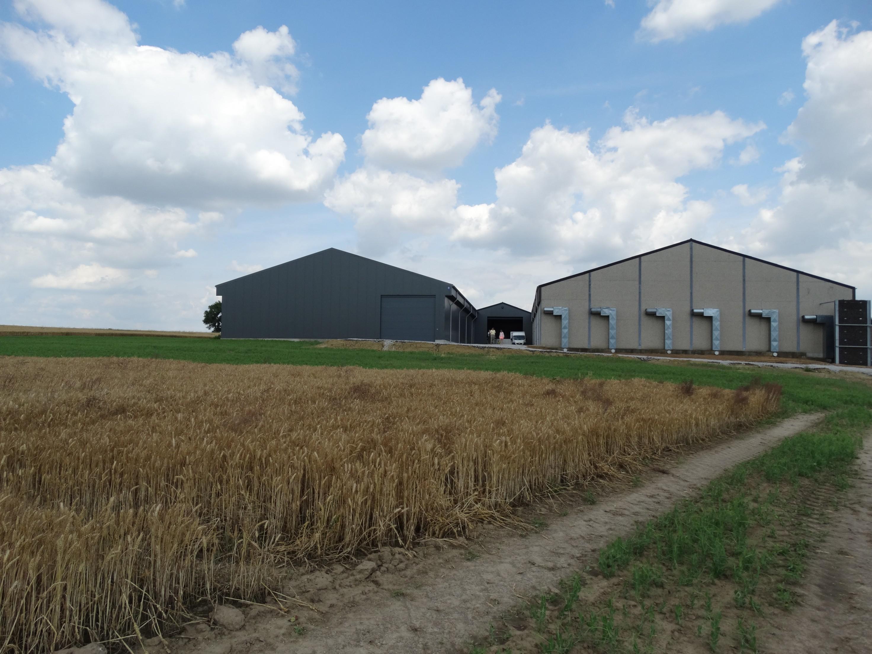 lefevre-Rosseignies-aardappelloods_hangar stockage pommes de terre (26).JPG