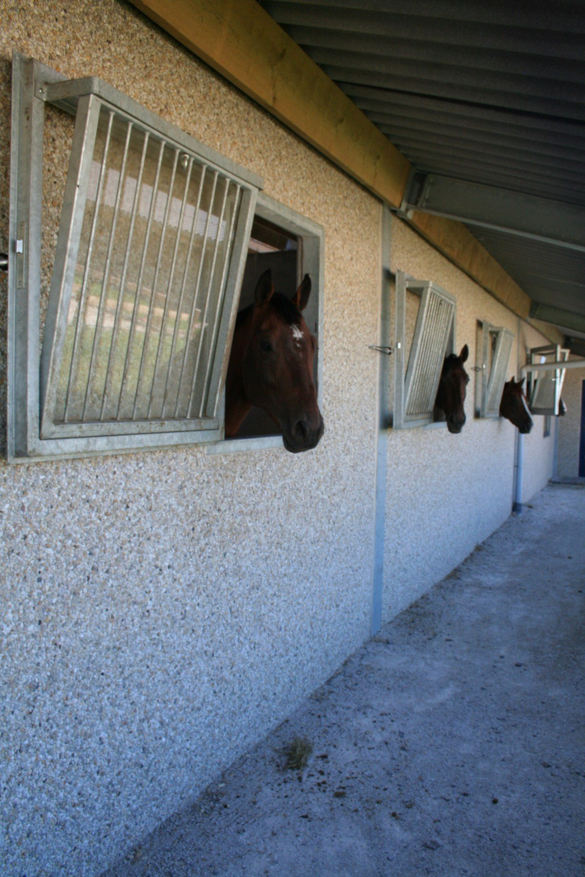 saint hermelle_paardenstallen_paardenboxen_binnenpiste_gouy les Pieton (12).jpg