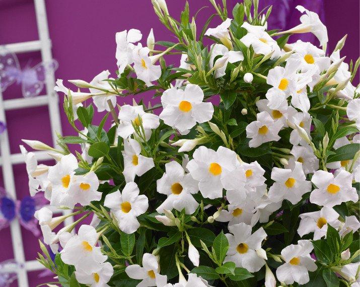 Sundaville-Grand-White-Product-RGB-570x714px-01.jpg